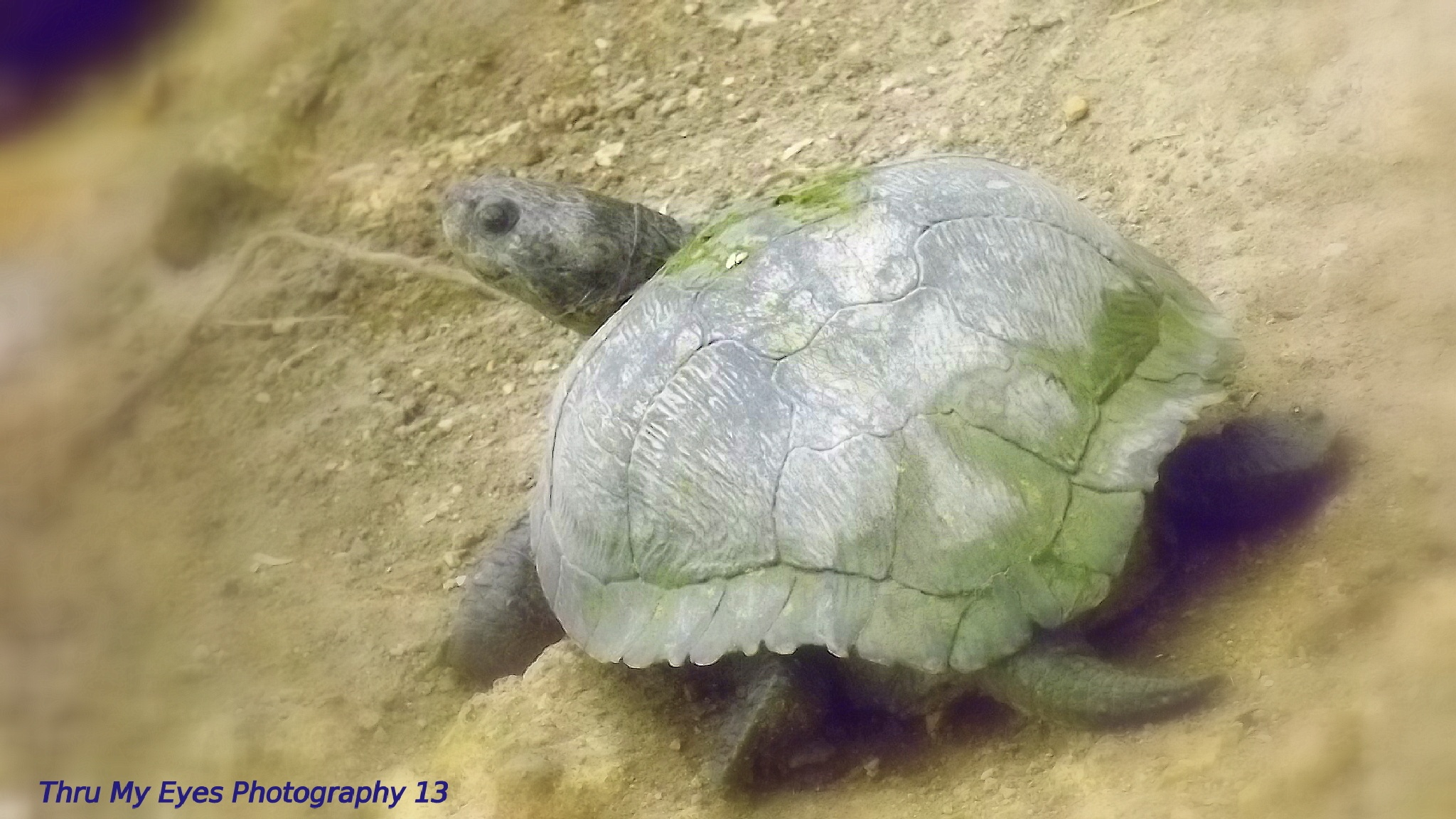 Turtles by captain