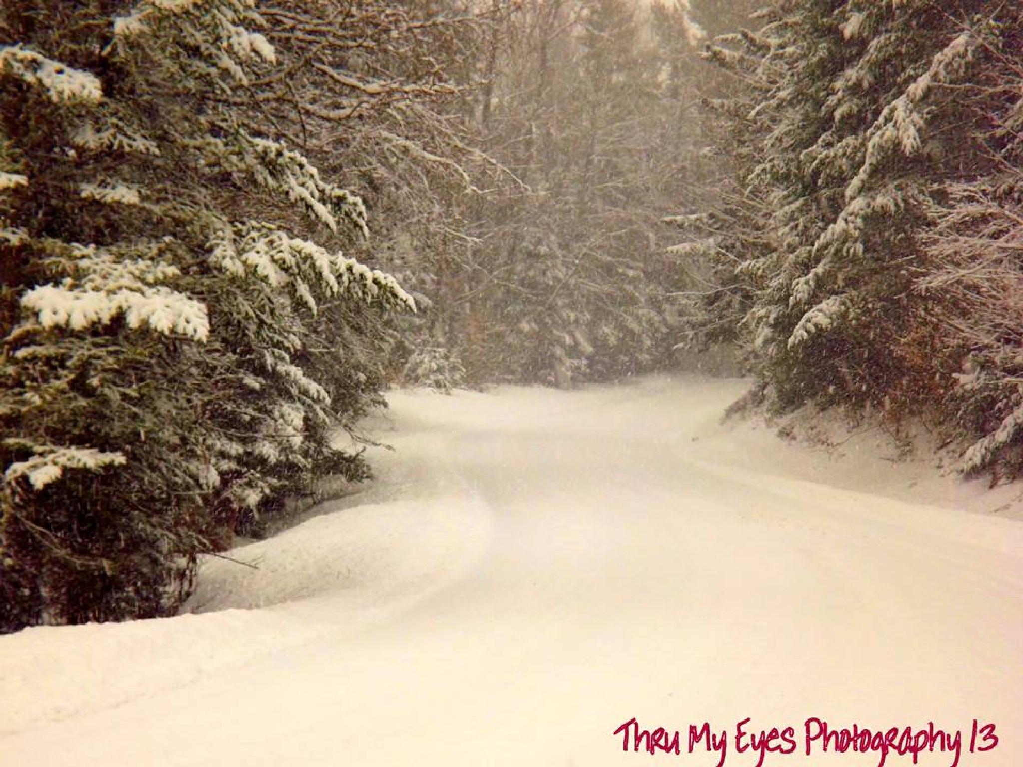 Winter Wonderland by captain