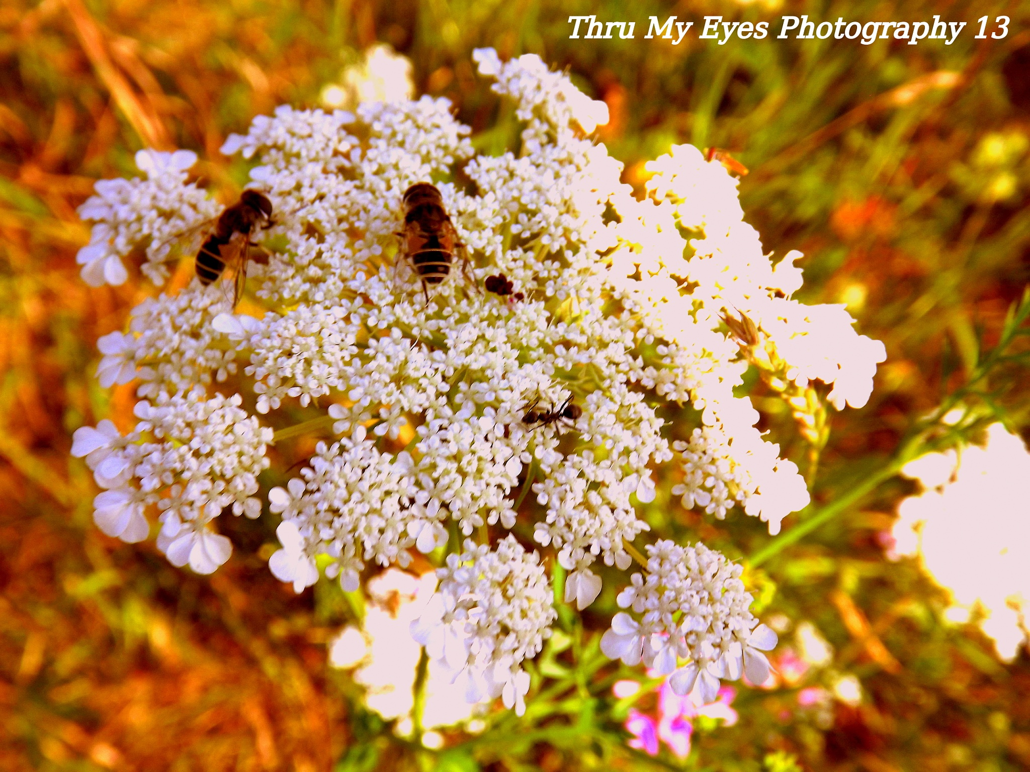 Bee's And Wildflowers by captain