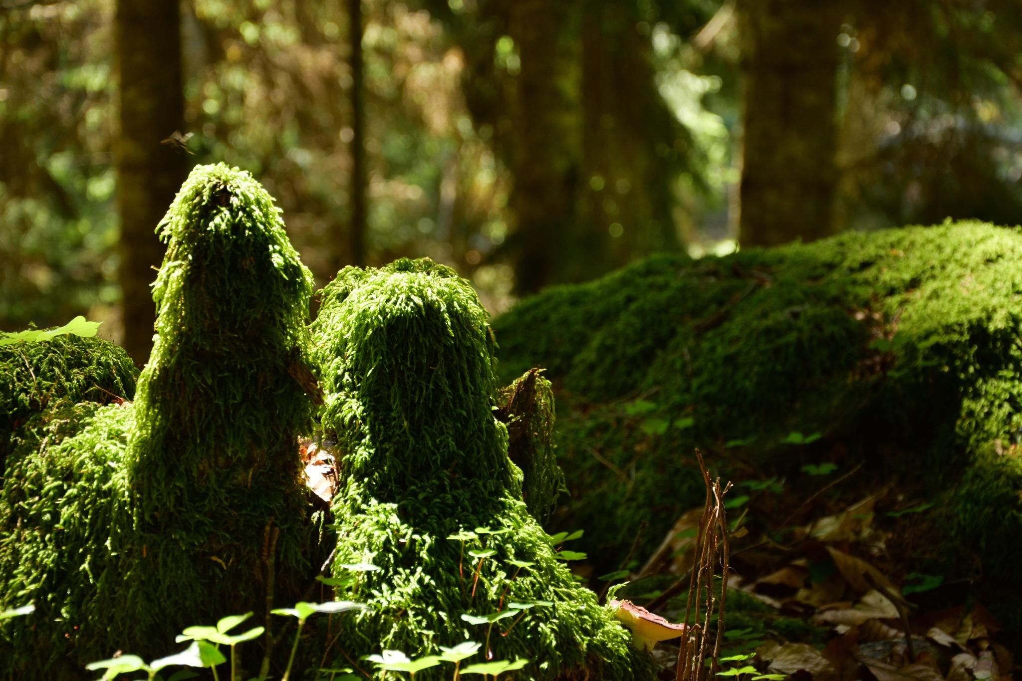 forest brothers by Ramazan Vasilev