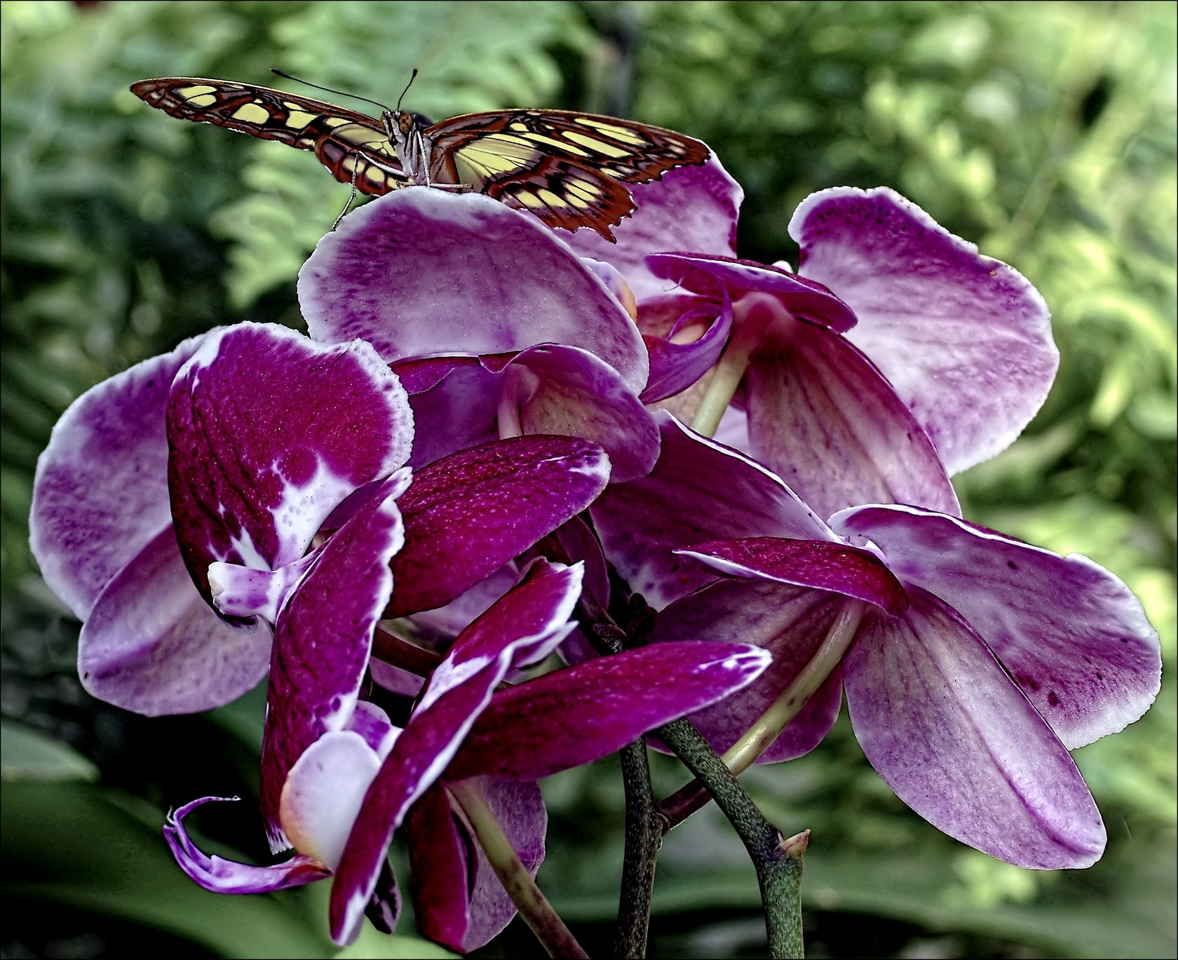 Papillon sur orchidée by Fernand Larochelle