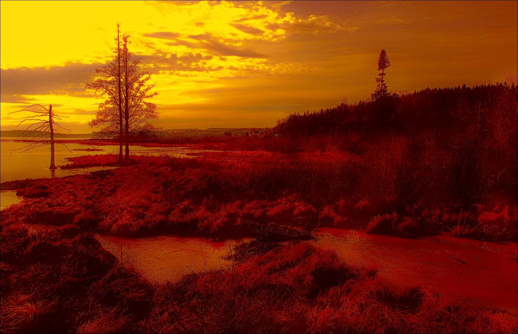 Un matin au marais by Fernand Larochelle