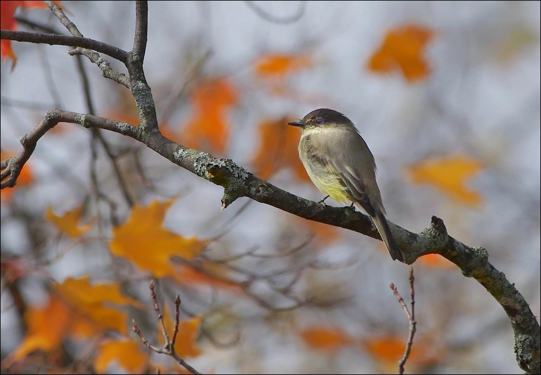 Oiseau / bird by Fernand Larochelle