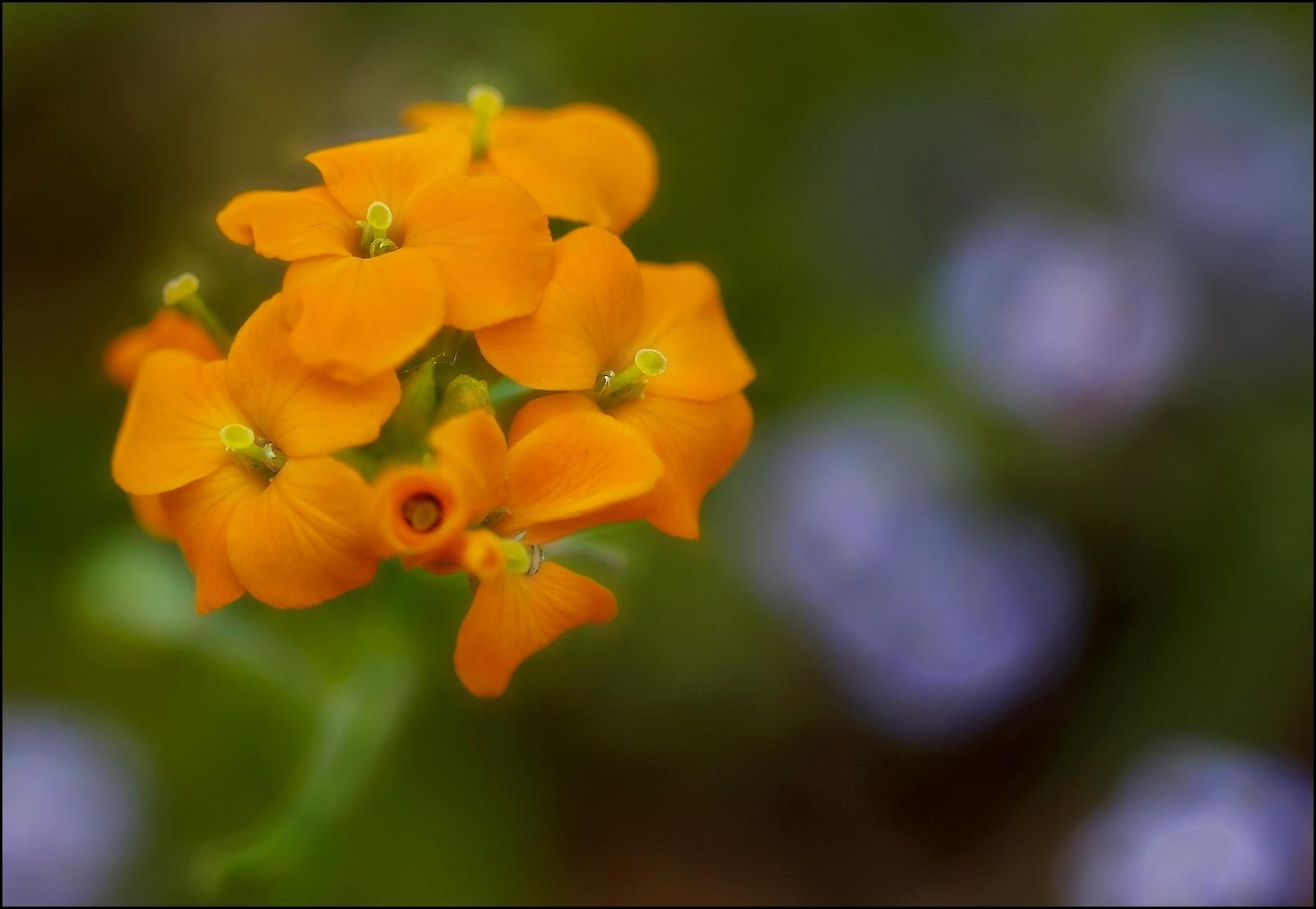 Orange by Fernand Larochelle