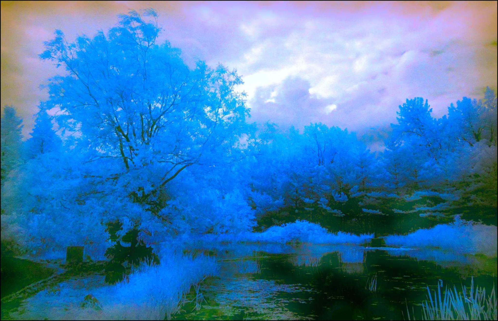 Electric blue by Fernand Larochelle