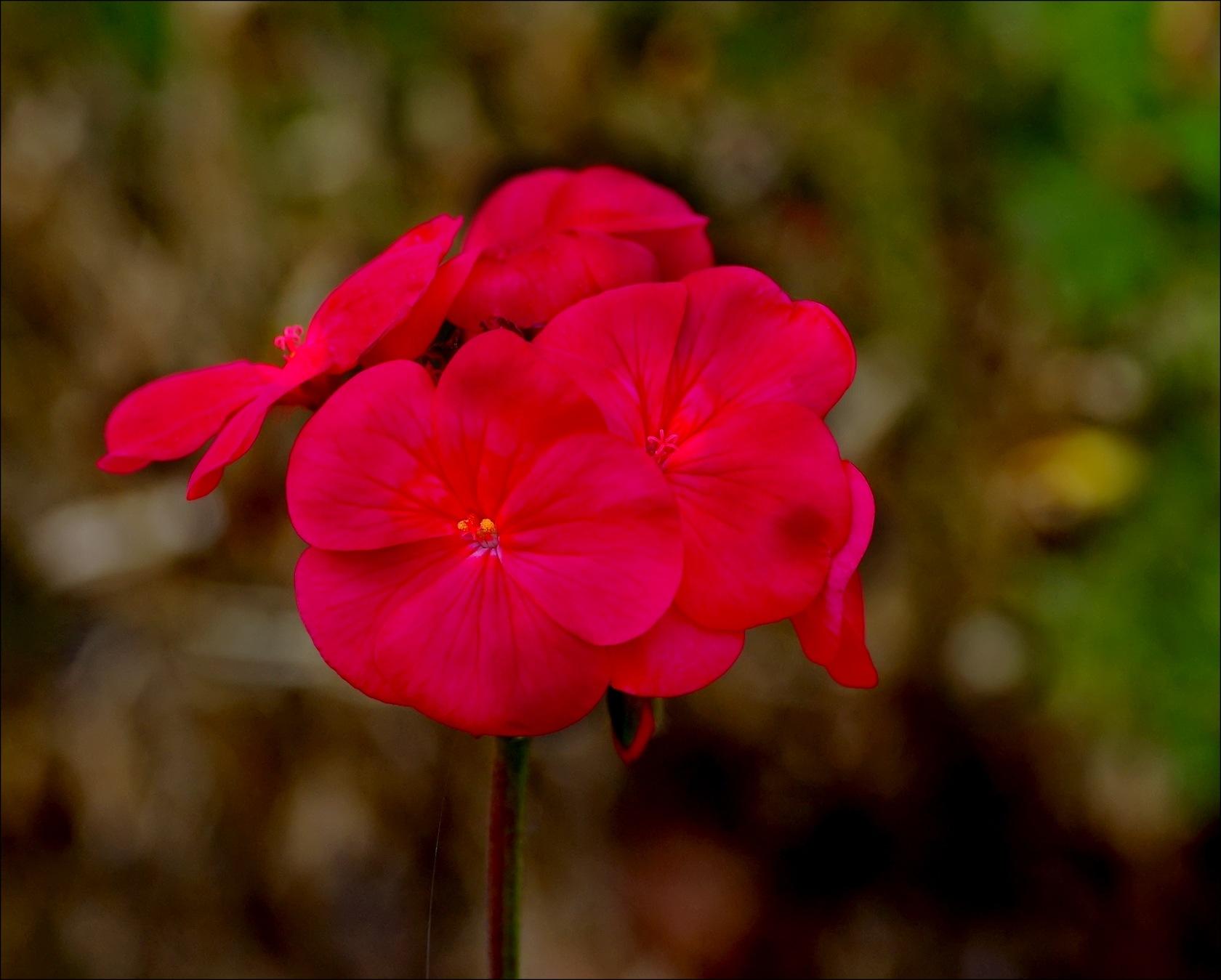 Petites fleurs by Fernand Larochelle