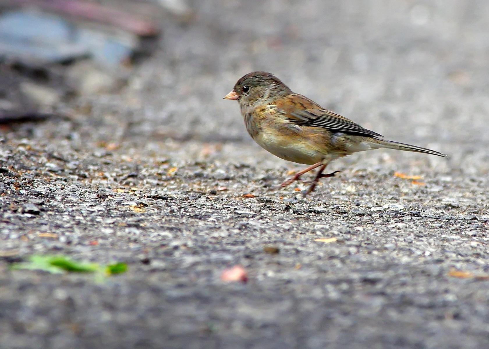 Petit oiseau by Fernand Larochelle