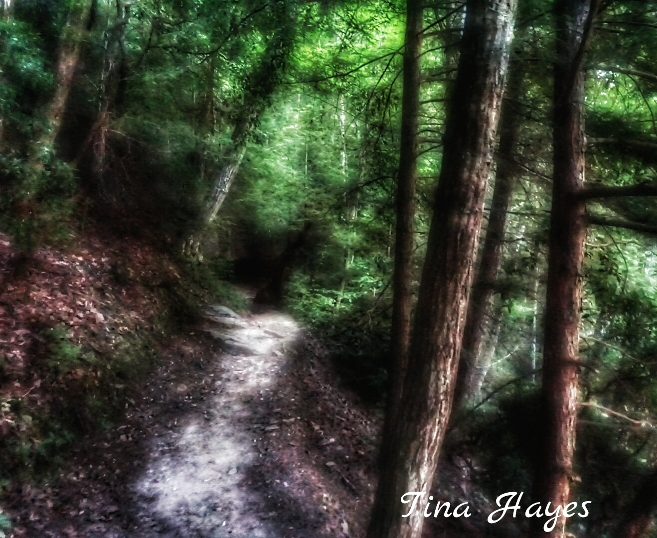 Cumberland Mountain Trail by Tina Hayes