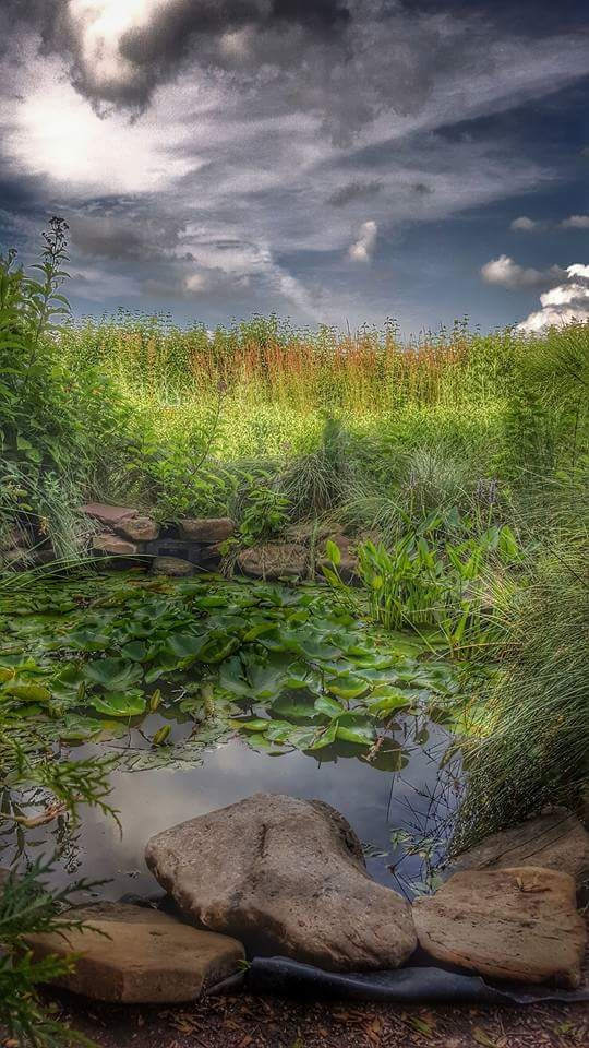Nature Reserve by Tina Hayes