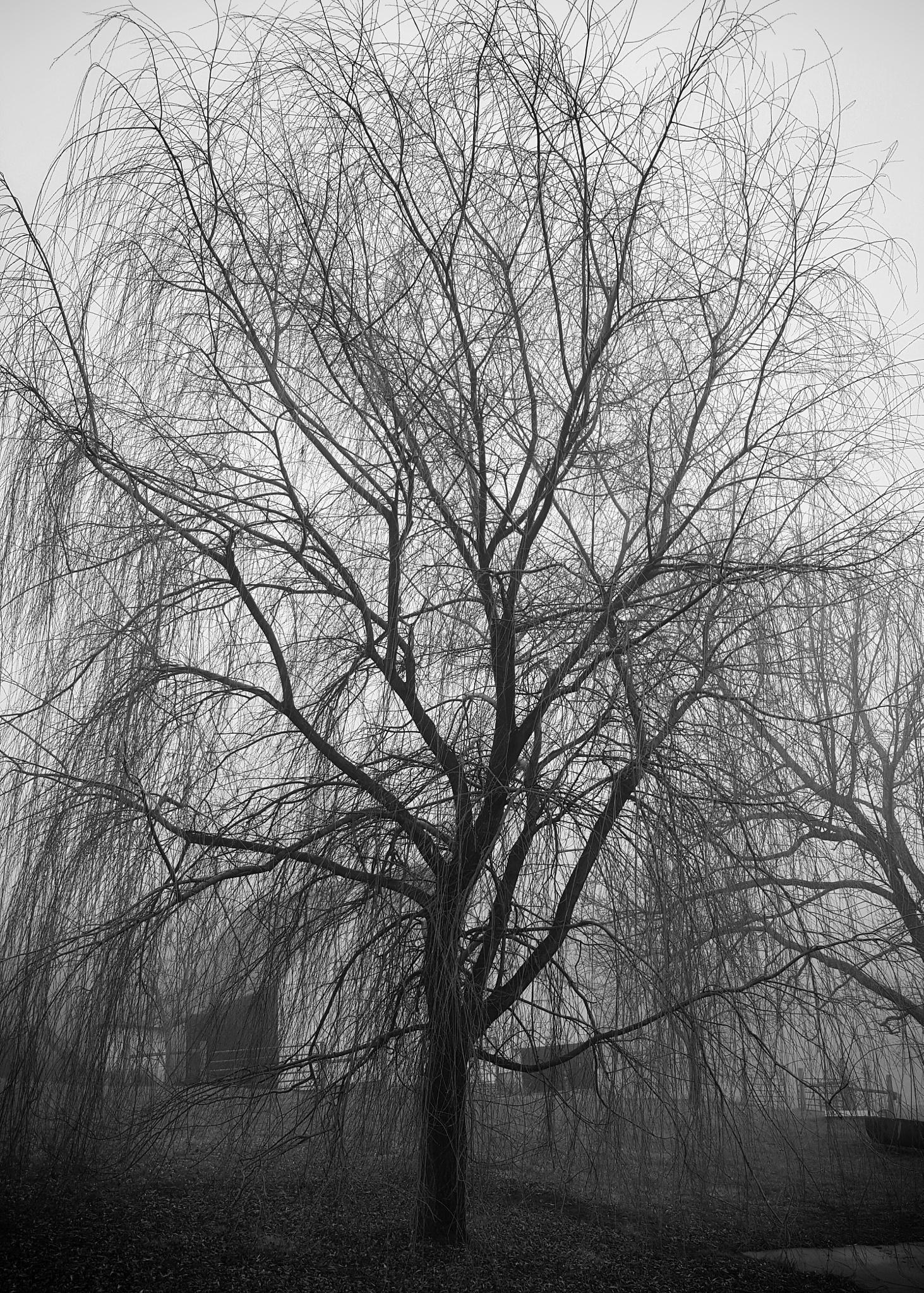 Foggy morning  by Darin Clubbs