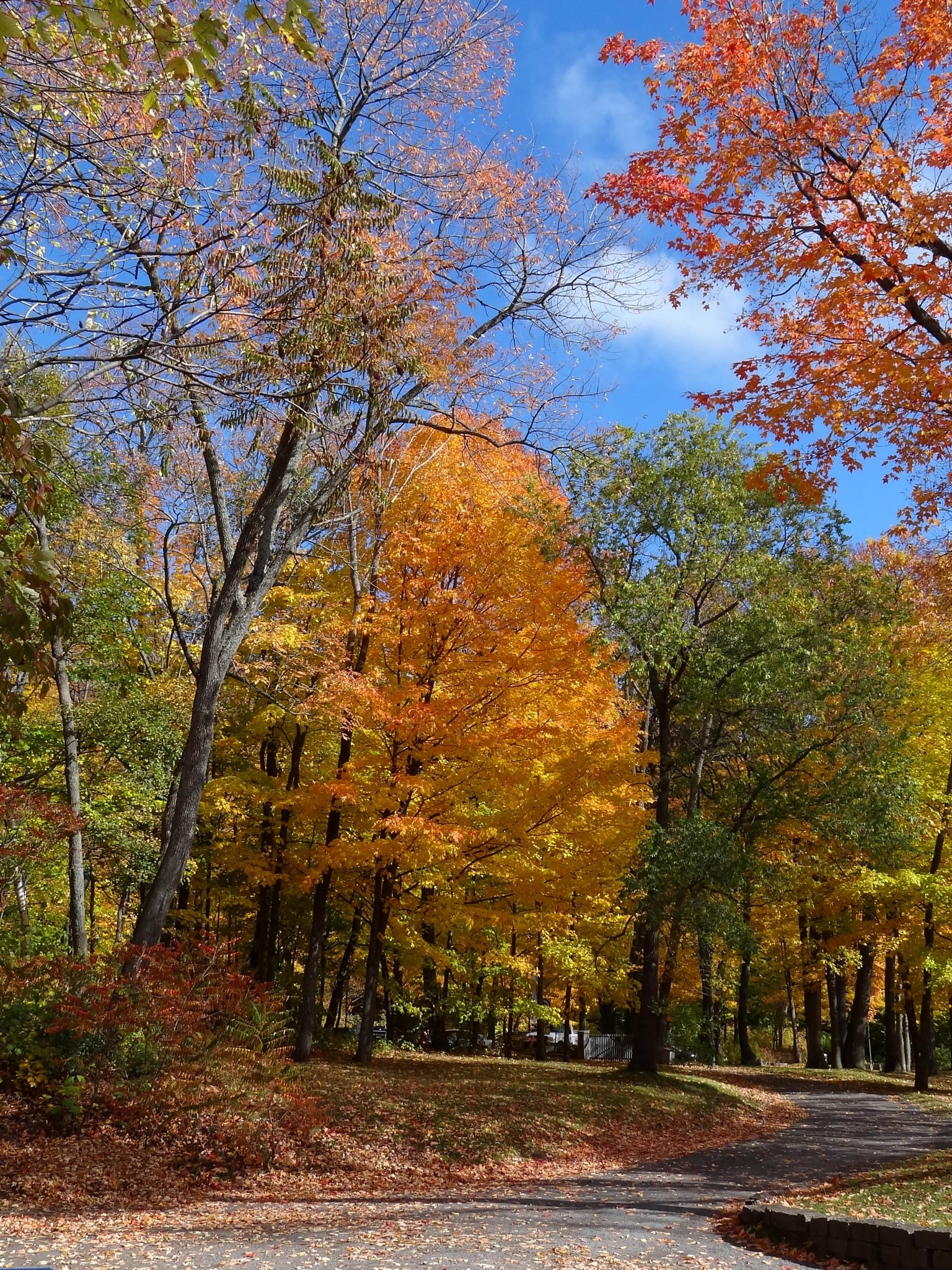 Fall colors by Jacques Trempe