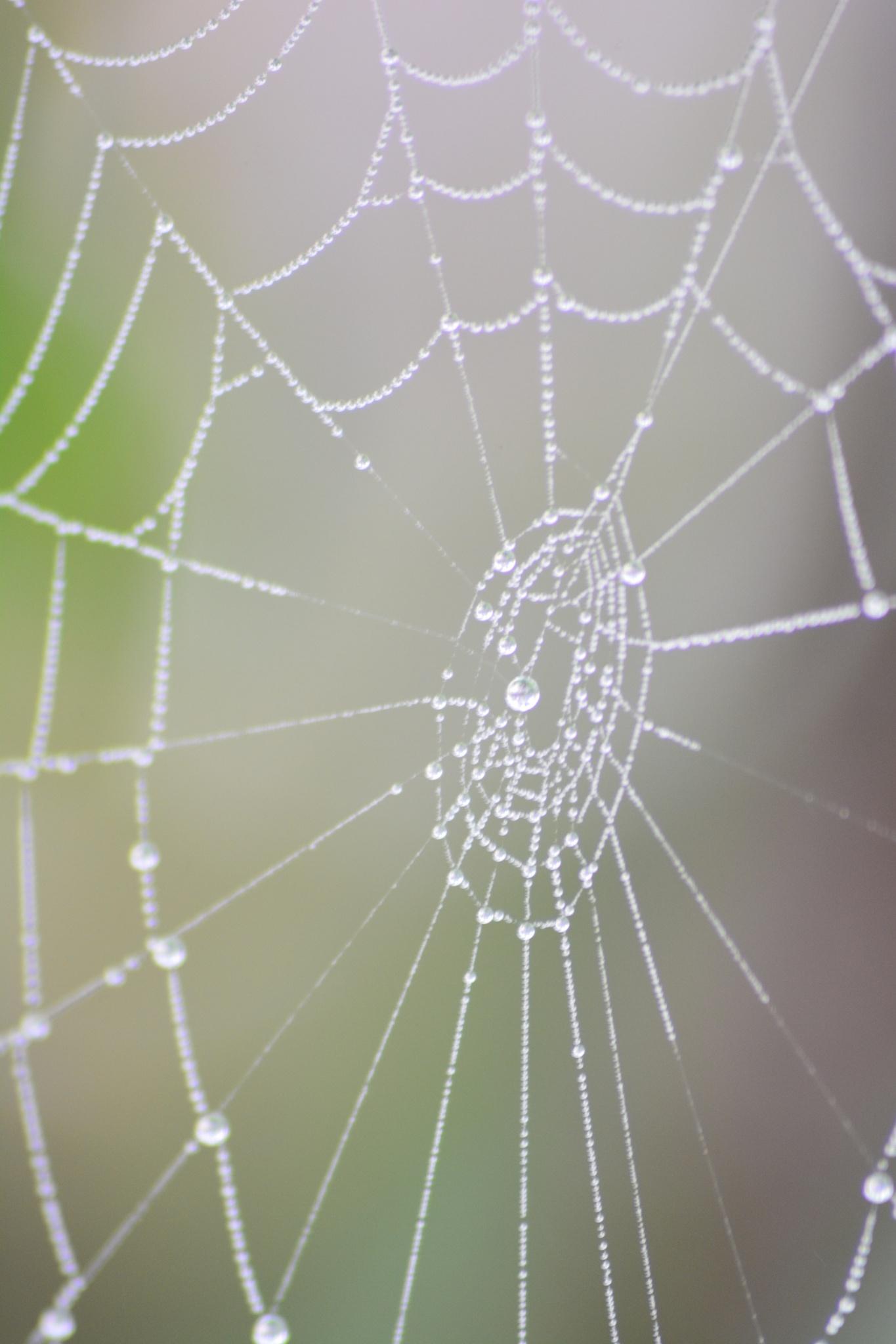 Spidernet by sablar