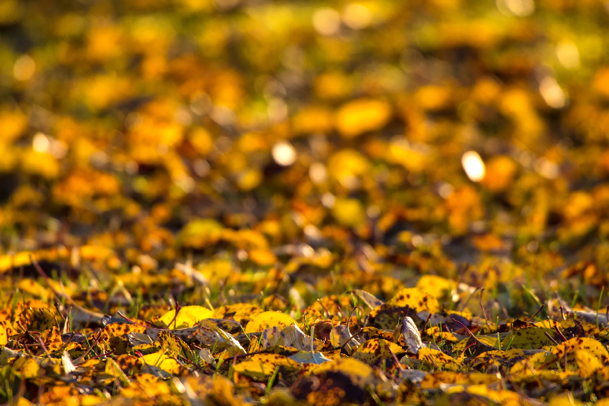 Golden by Anders Hedlund