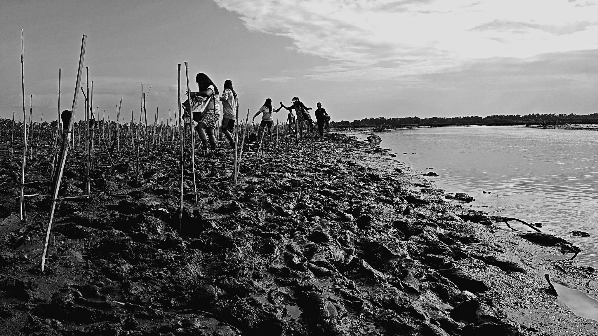 Mangrove Tree Planting Project by Paolo Fuller