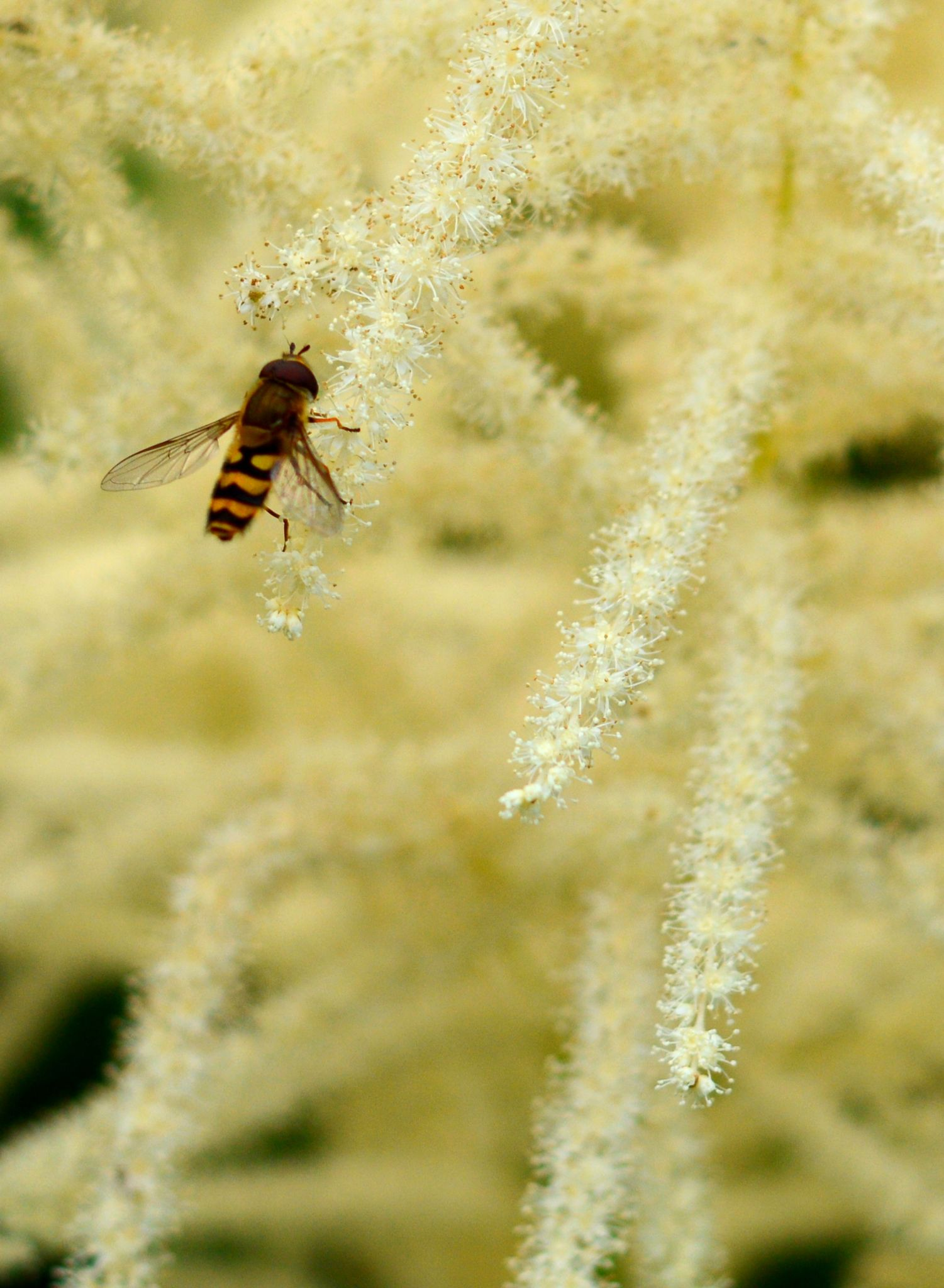 Hover Fly by martinfairbairn178
