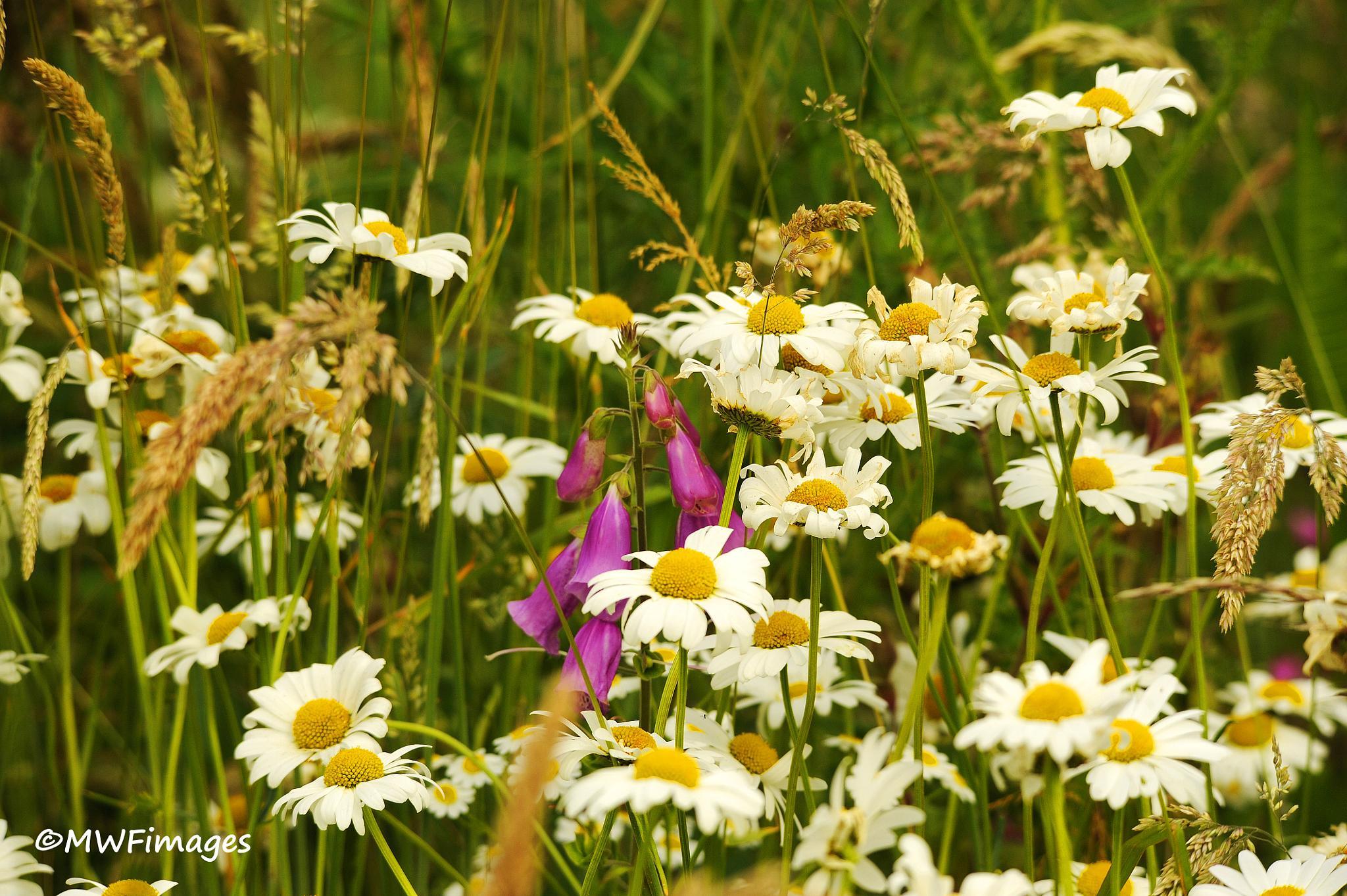Wild Flora, by martinfairbairn178