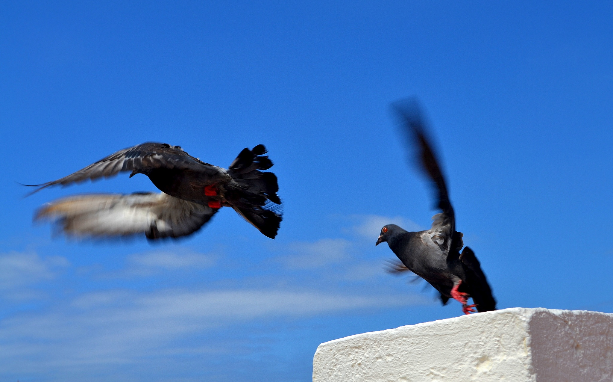 When they fly by luistabeliao