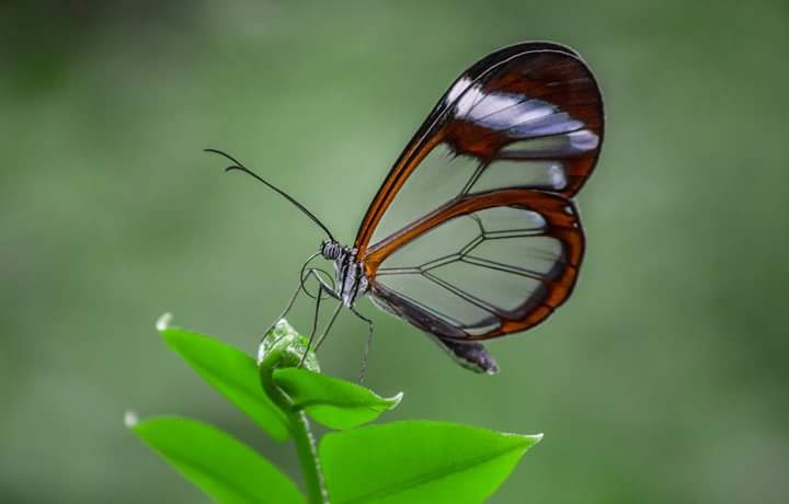 glass wing by  Rojas