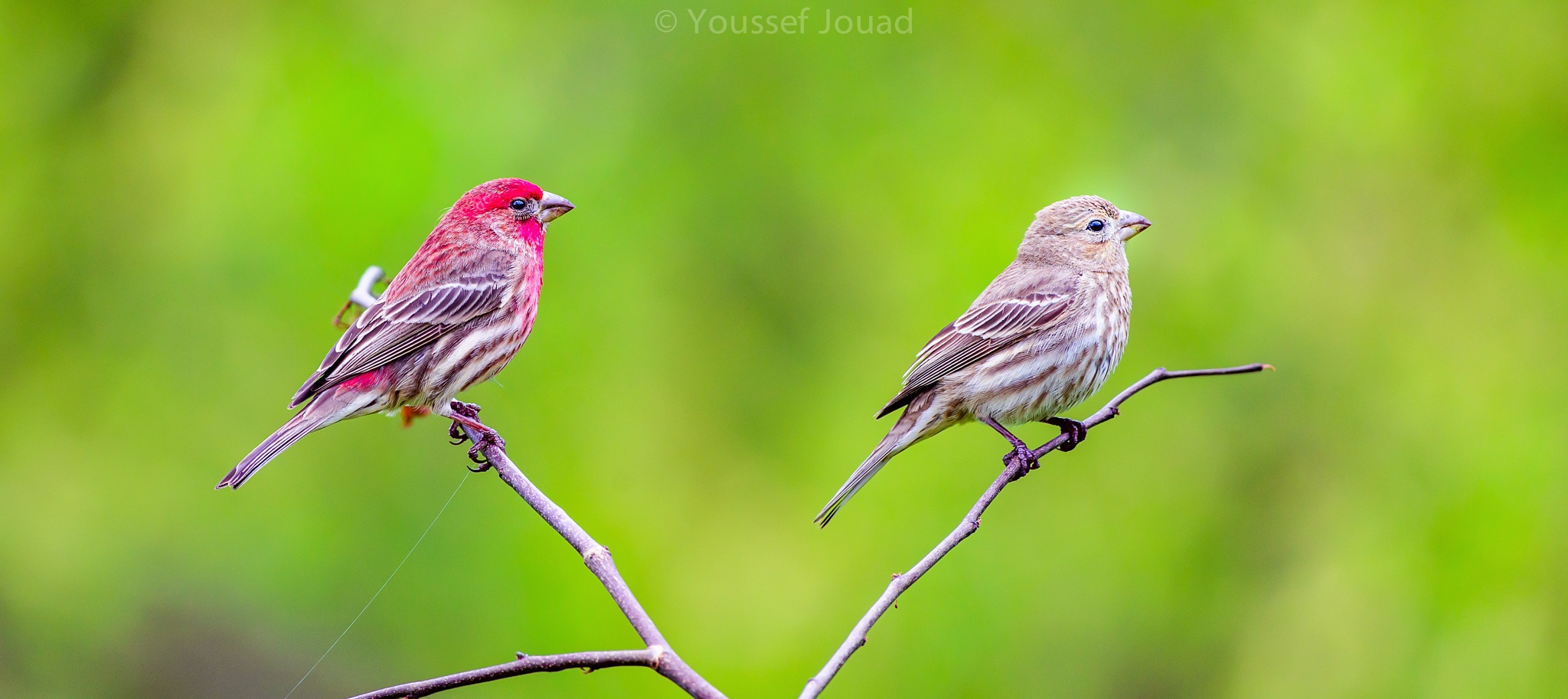Beautiful couple birds by Youssef Jouad