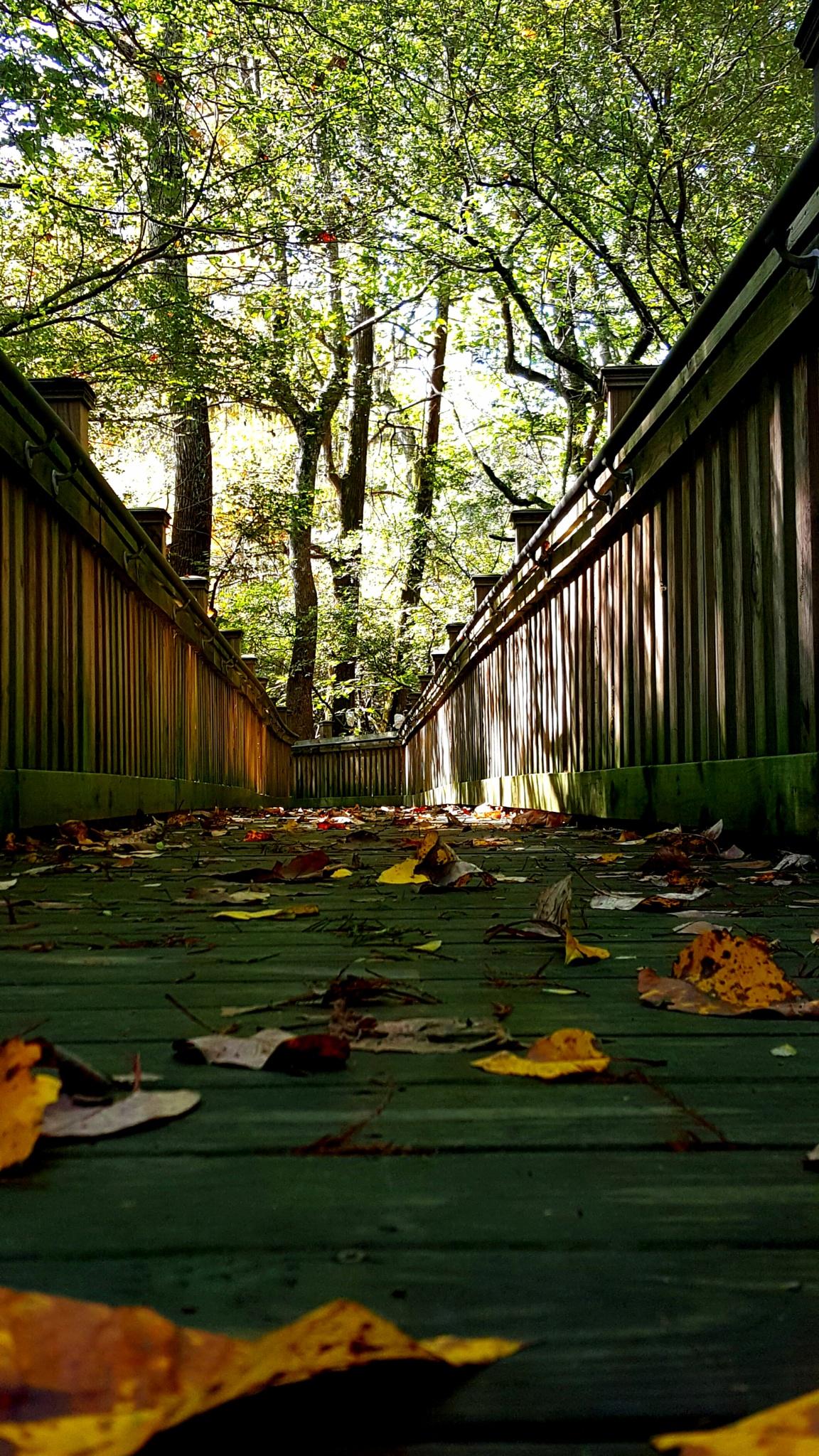 Fall by kellruss
