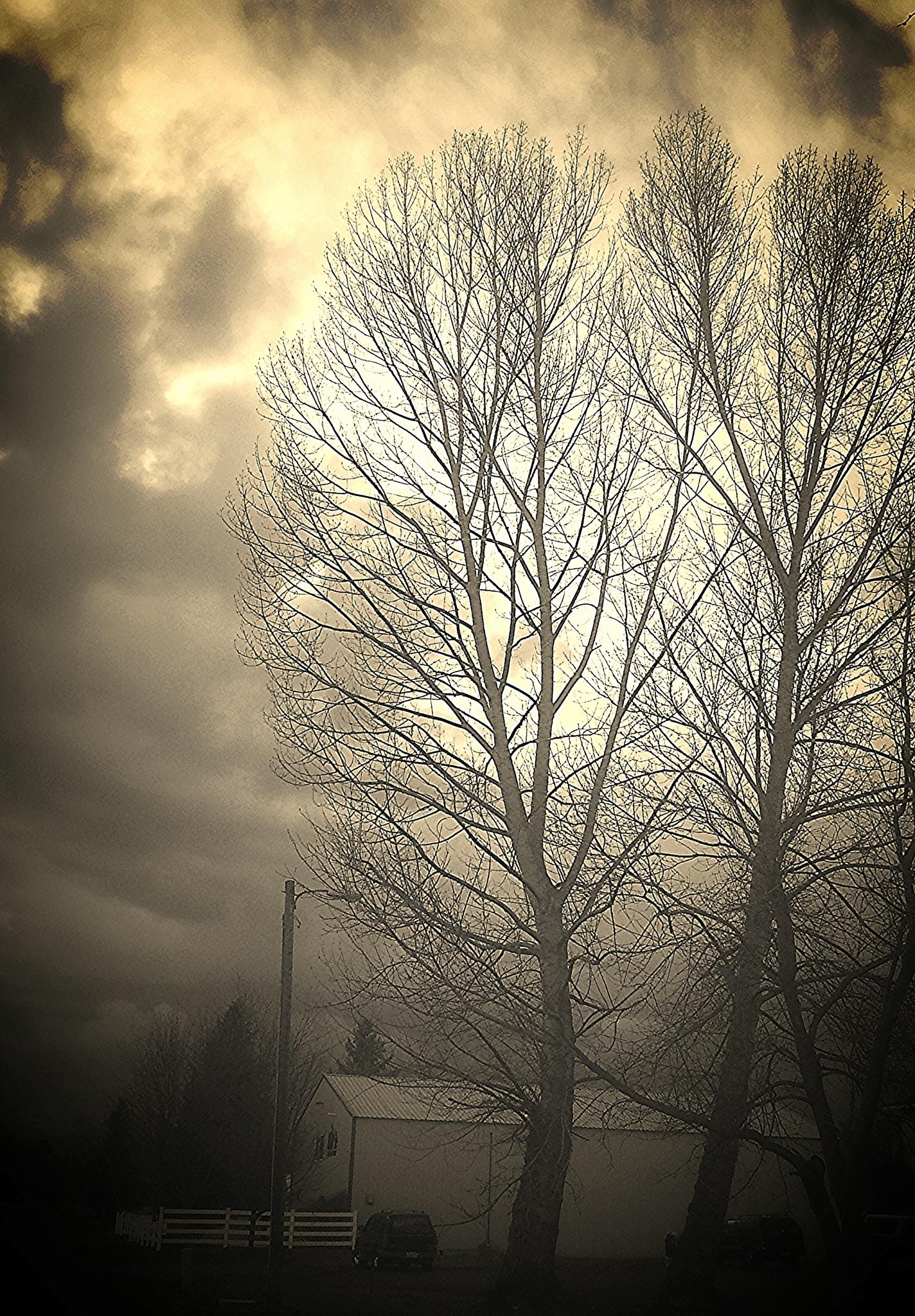 Untitled by Dawn Morri Loudermilk