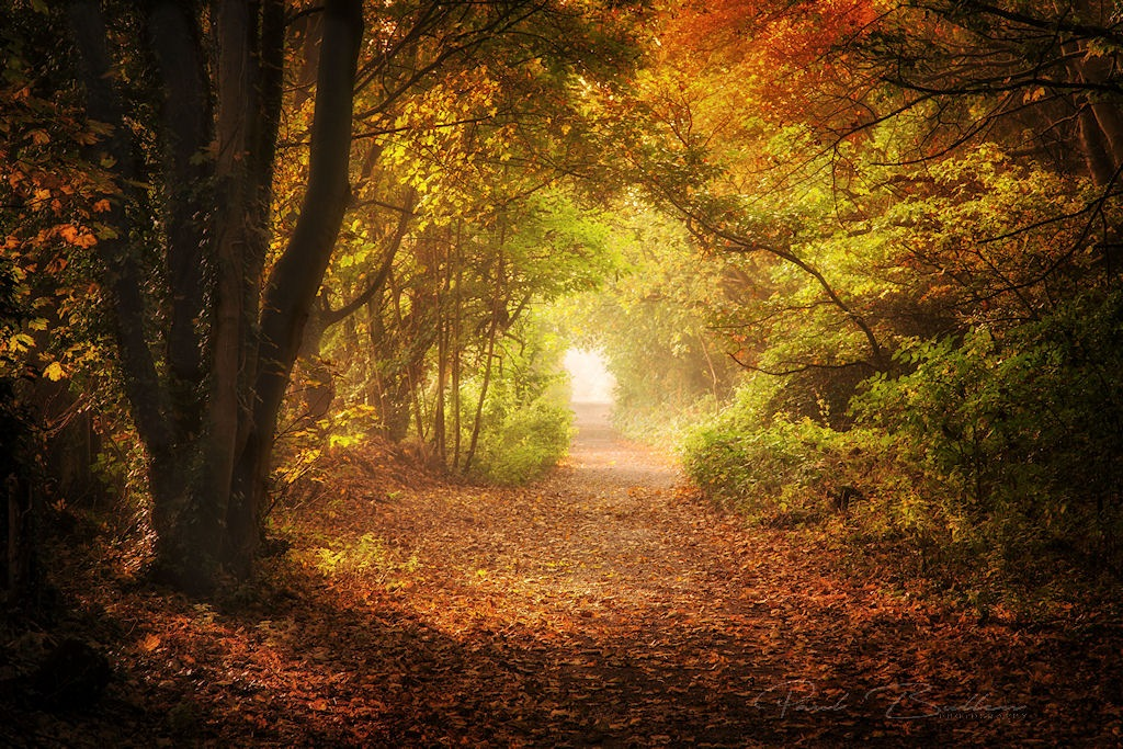 Autumn by PaulBullenLandscapes
