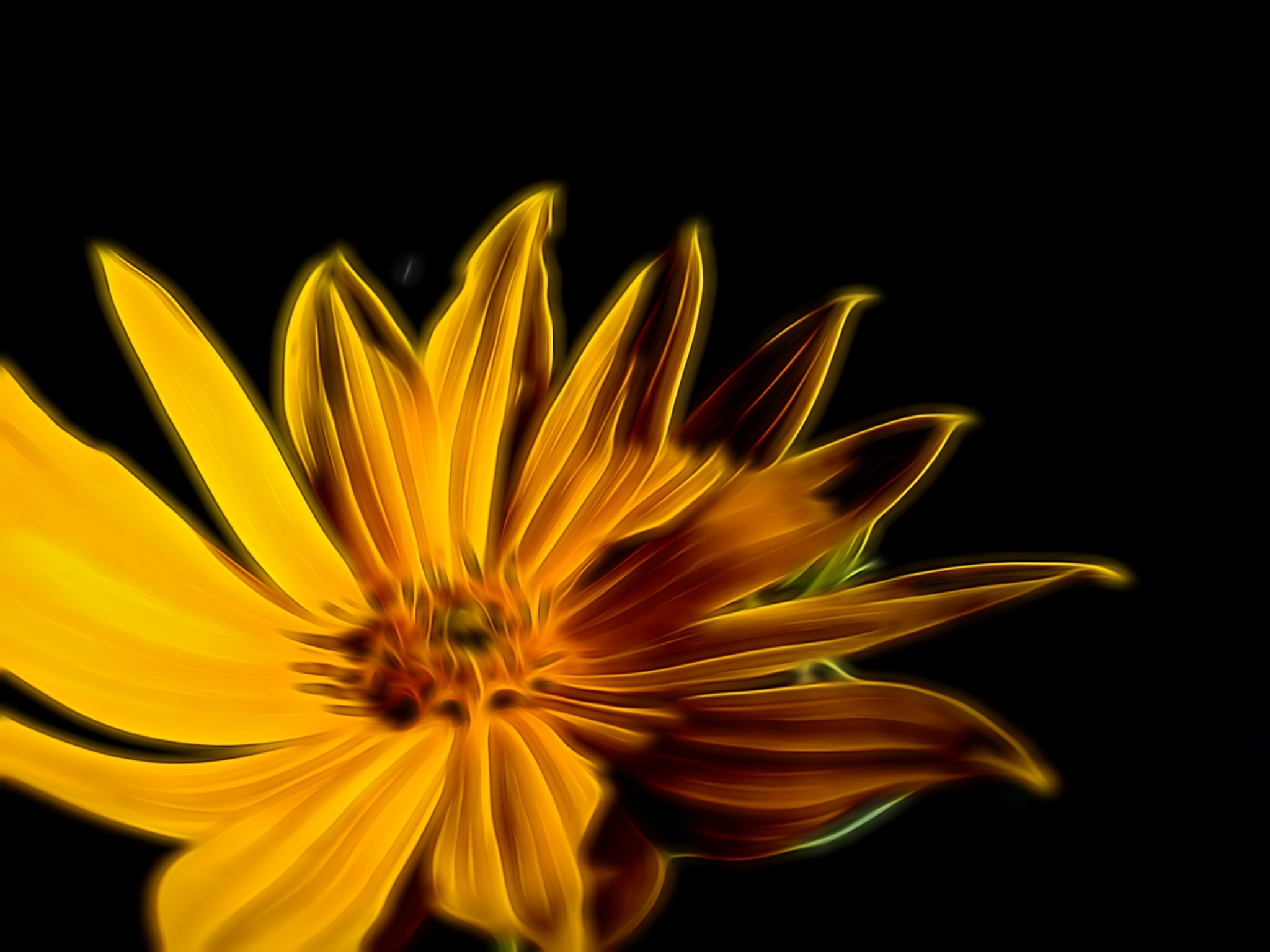 yellow flower by photoSophy1990