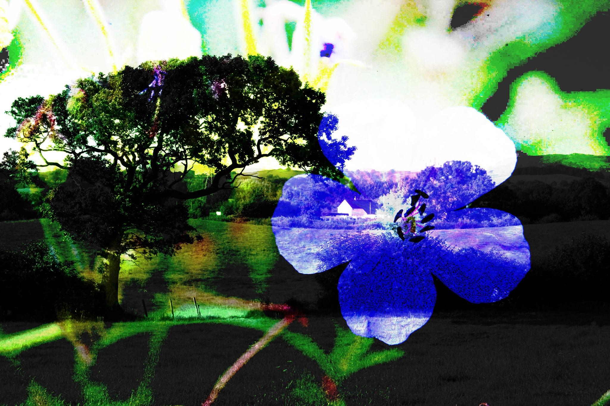 Blue Sun  by Vicky Sally Naughton