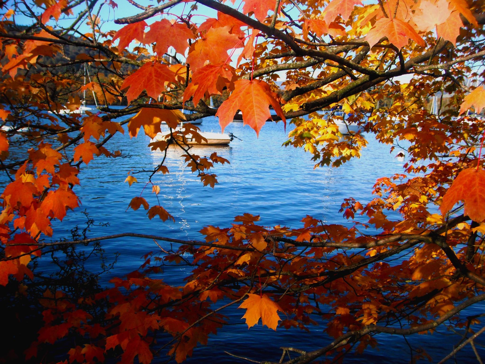 Autumm On The Lake  by Vicky Sally Naughton