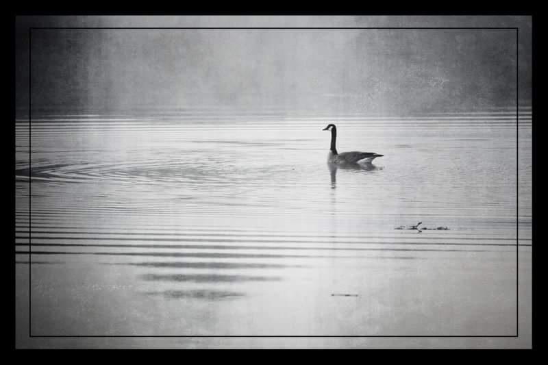 Morning swim by Barry Larson