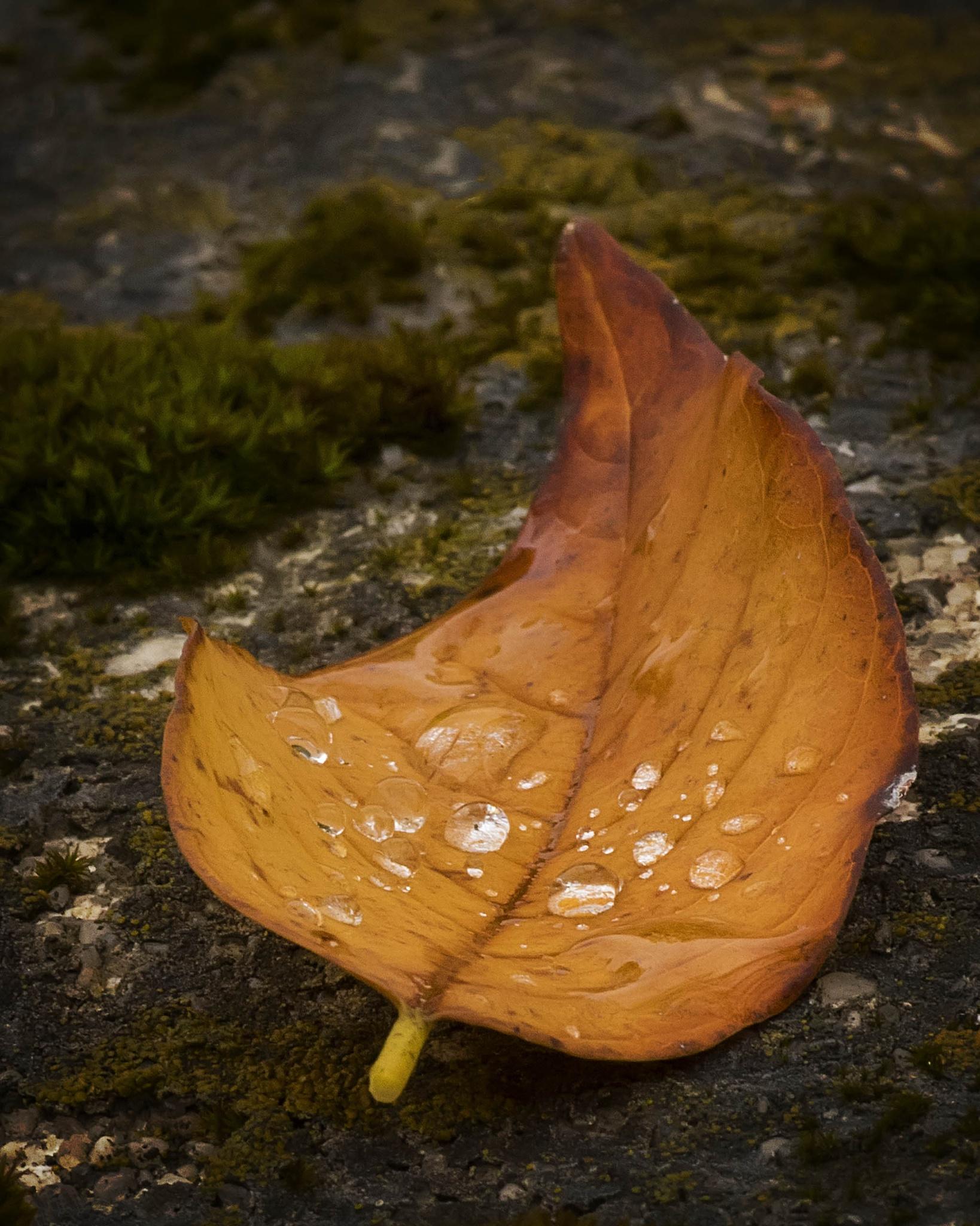 Fallen Leaf by Scott Allen