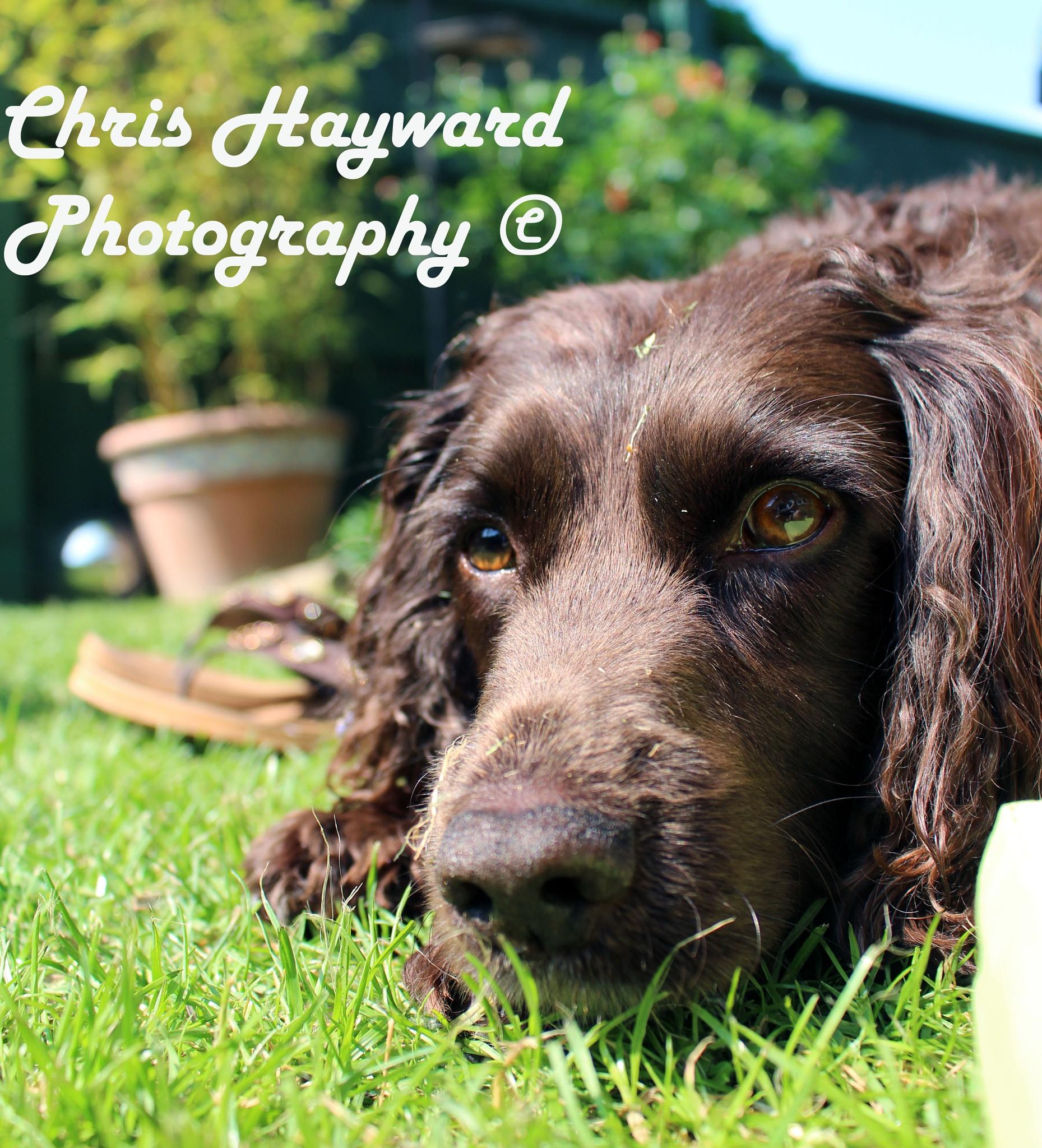 Honey  by chris hayward