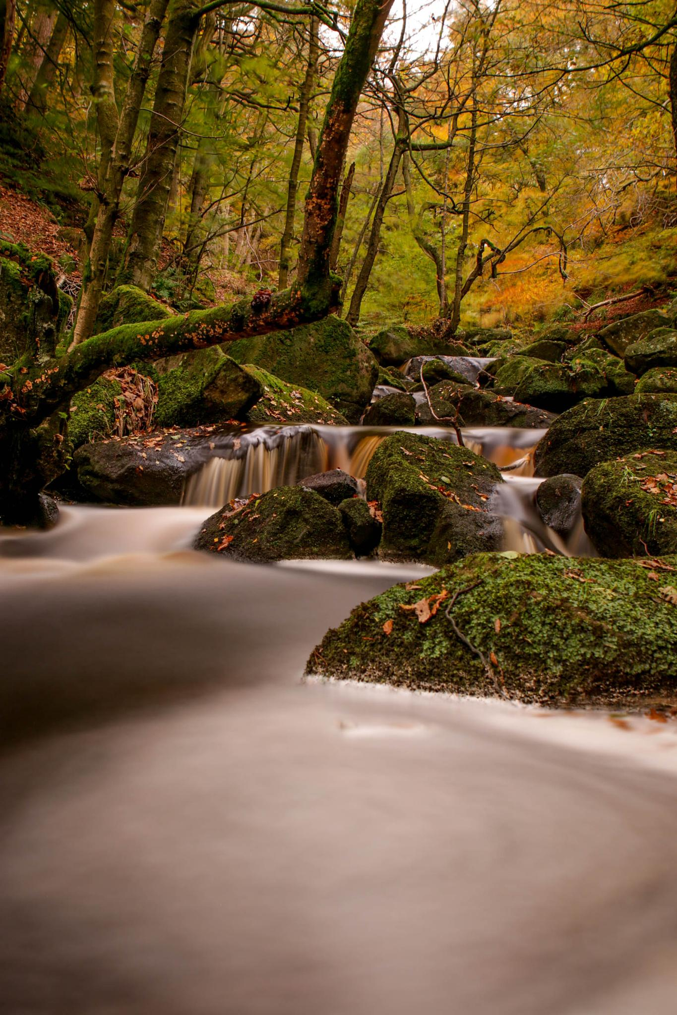 padley gorge again by peter roberts