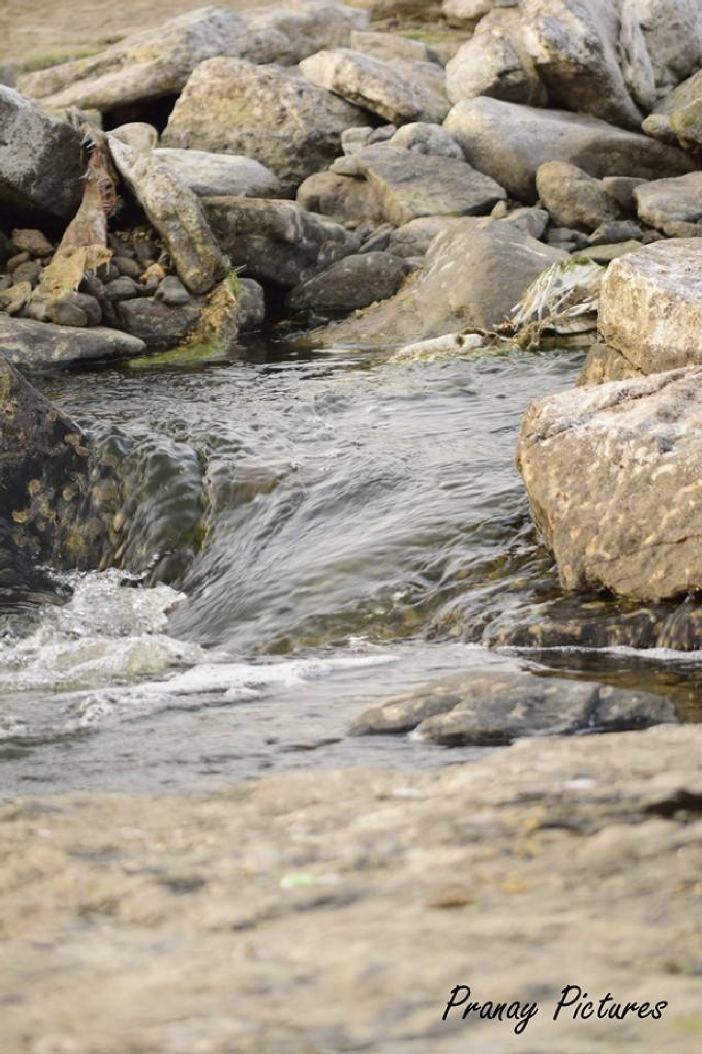 Flowing Water 2 by Pranay Pictures
