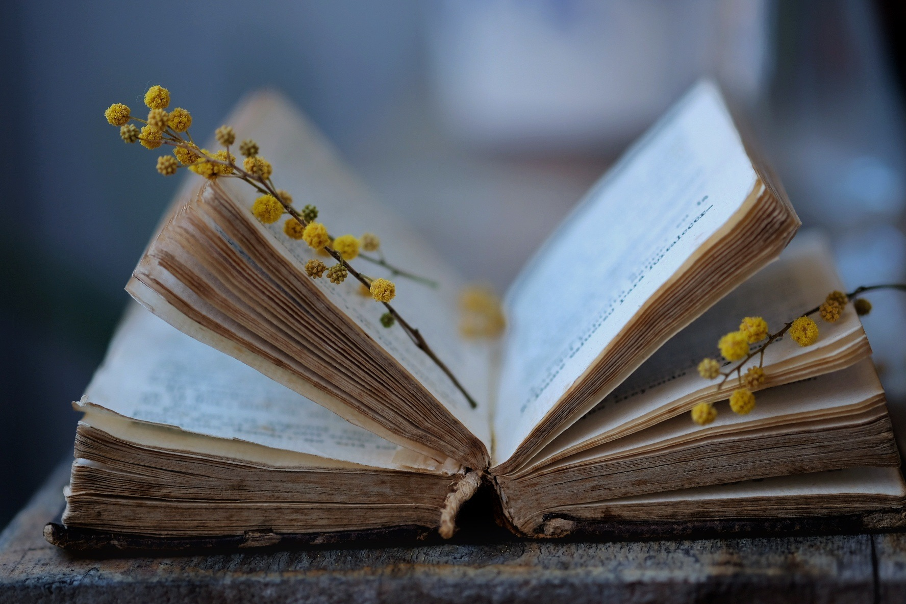 Photo in Still Life #book #flowers #yellow