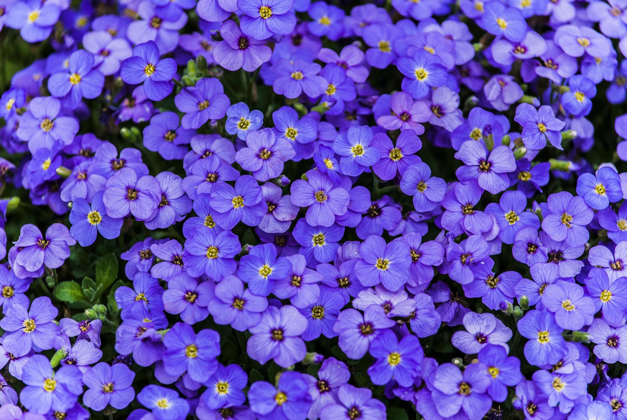 Blue flowers  by Marian Lázaro @malenaban