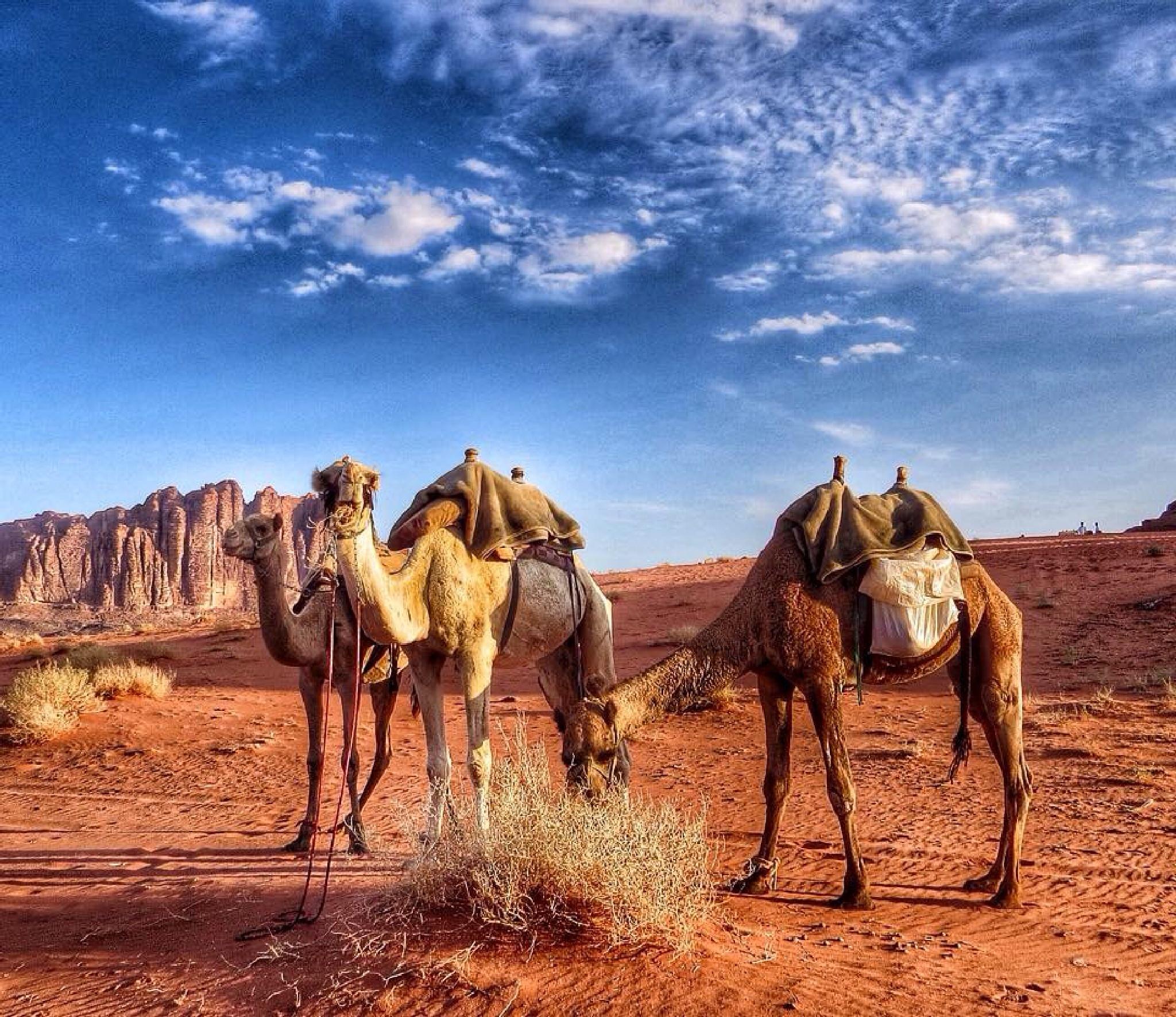 The Sahara by Hikona