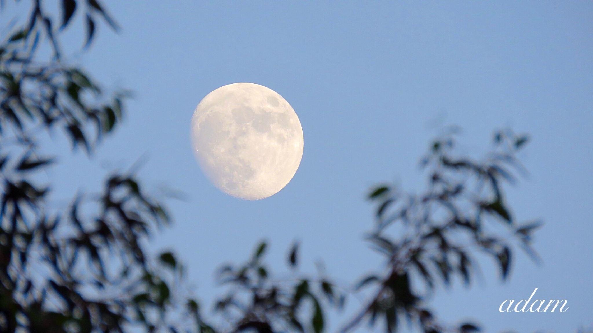 The moon  by Hikona