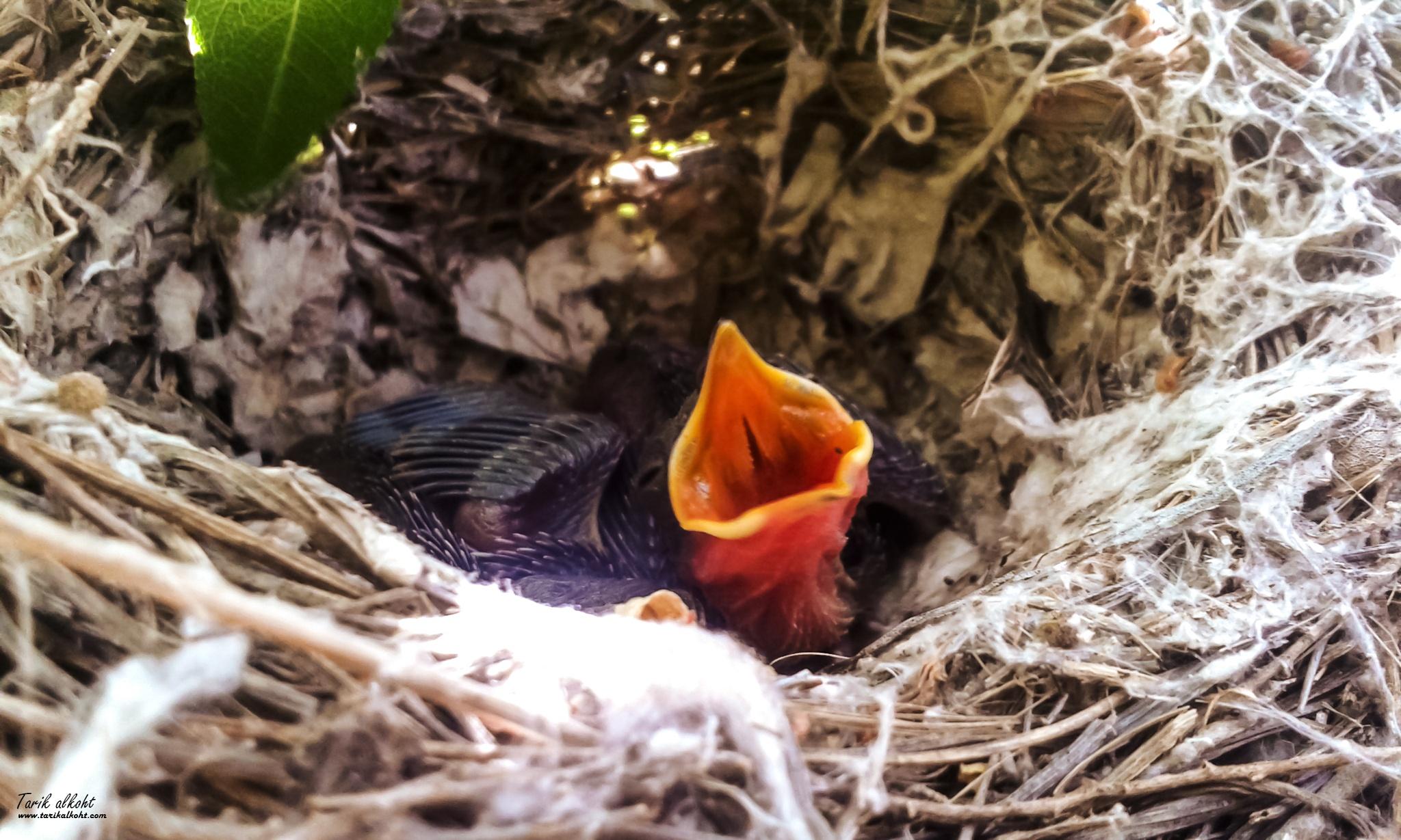 Kerkvan Bird by Tarikalkoht