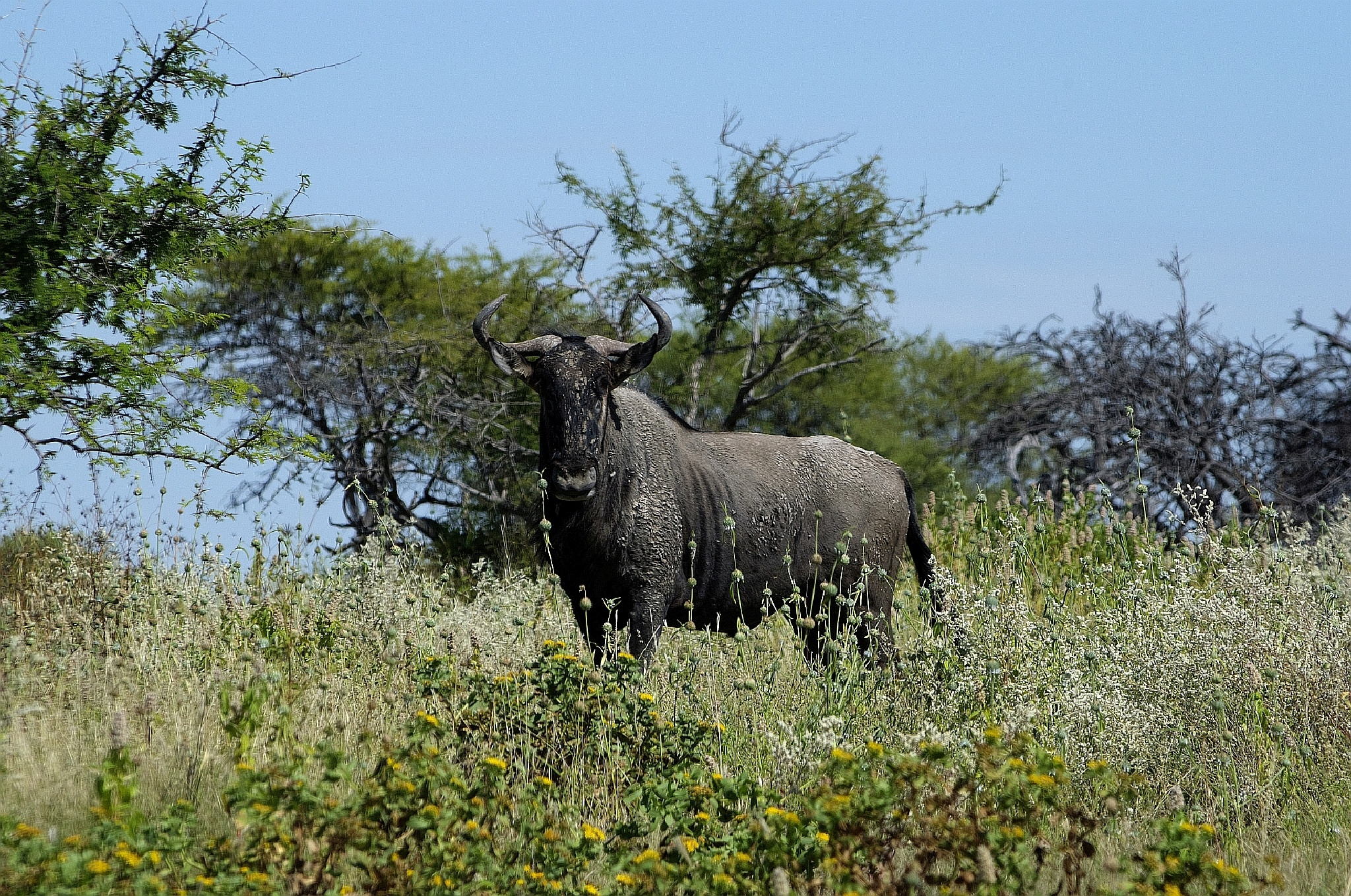 Etosha Nationalpark by x40