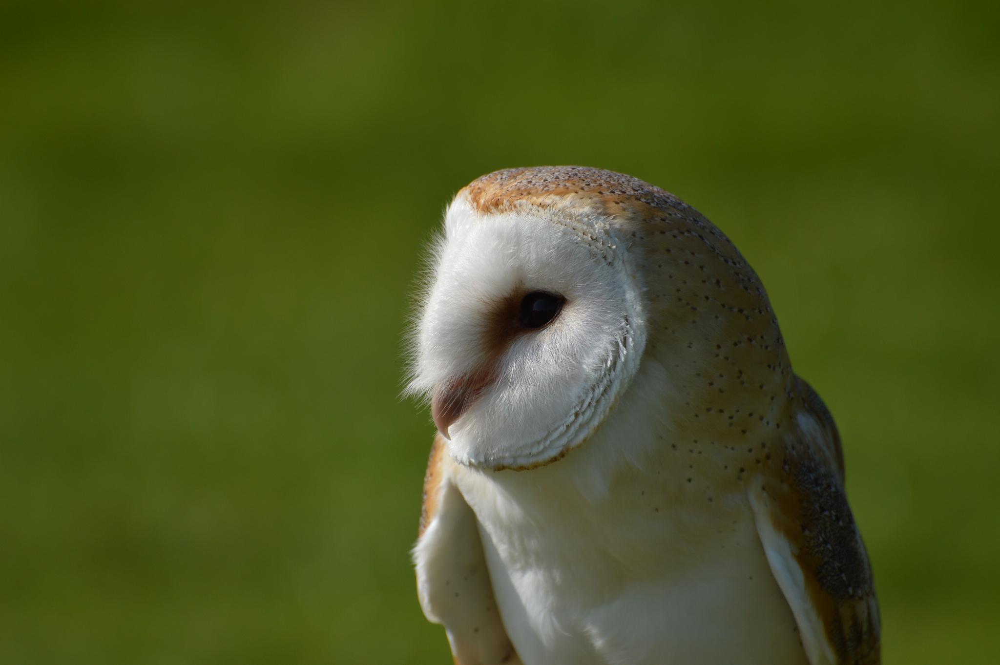 uil,owl by martin vuurpijl