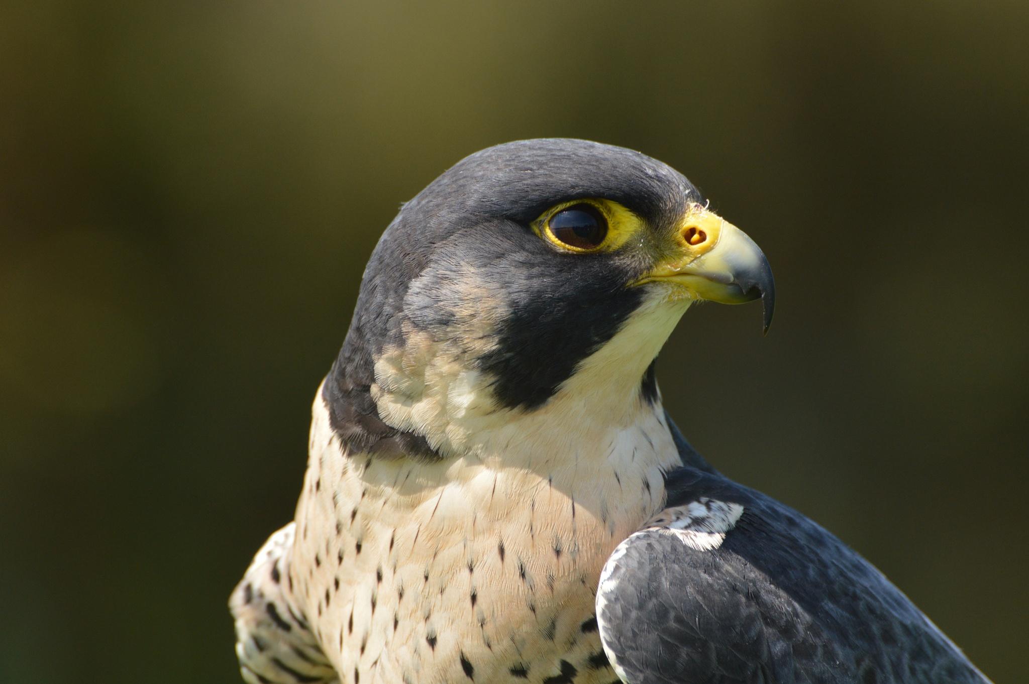 vogel by martin vuurpijl