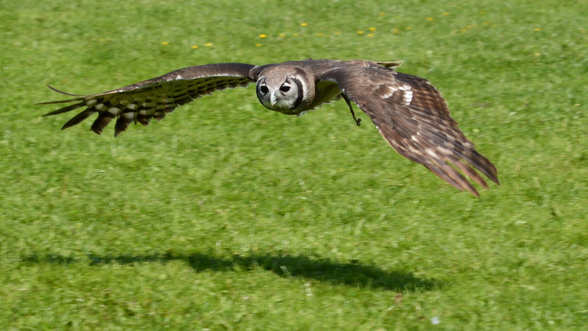 owl by martin vuurpijl