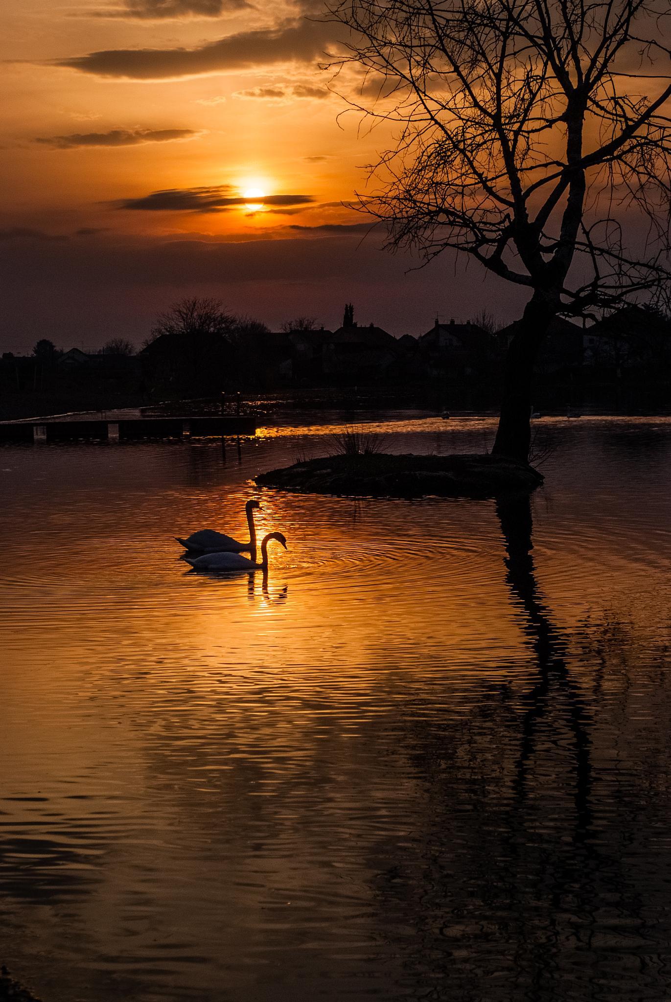 Photo in Animal #swon sunste love