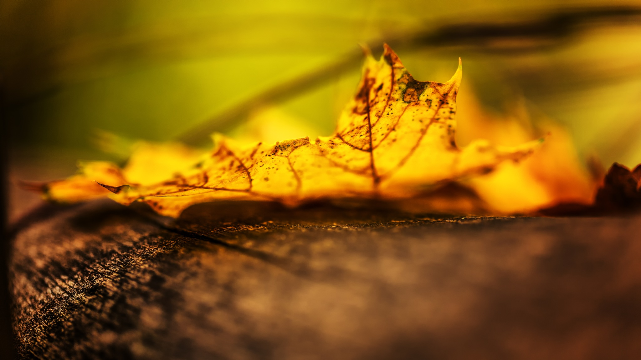 Autumn is here! by Hameed S
