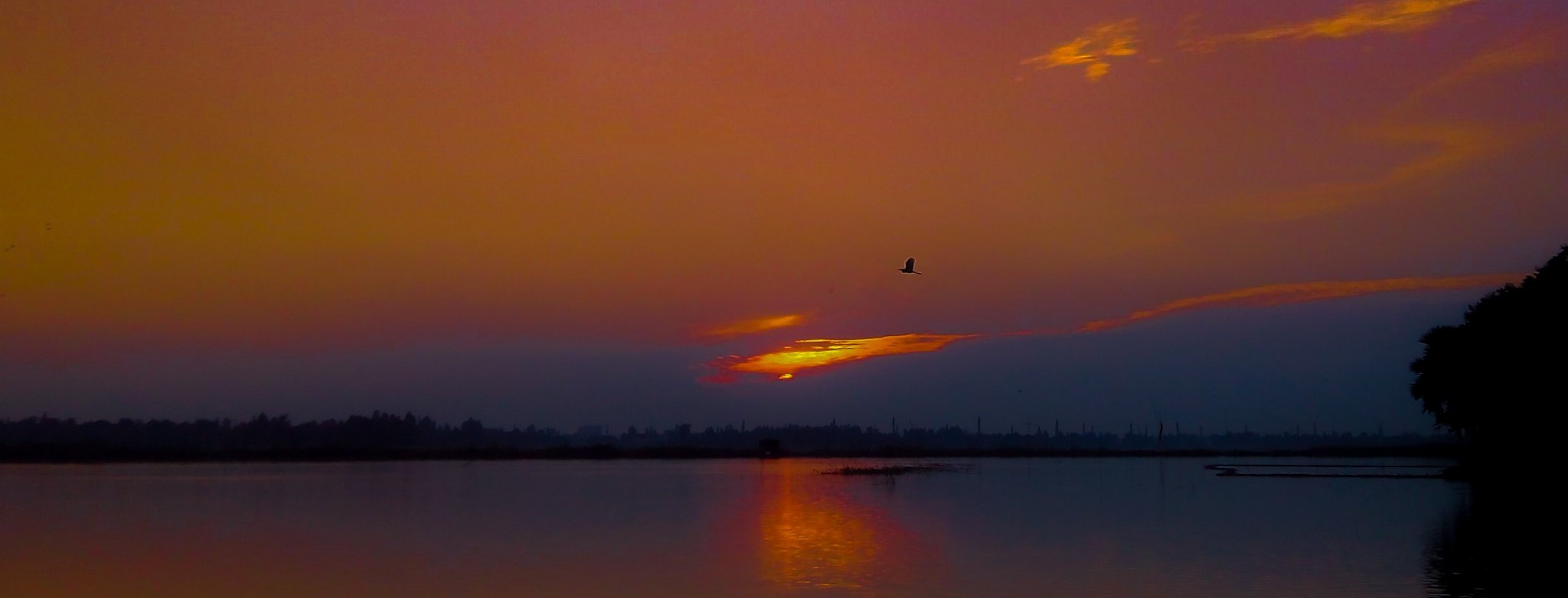 the bloody sun set and a lonely gull........ by Abdullah Ibn Ali