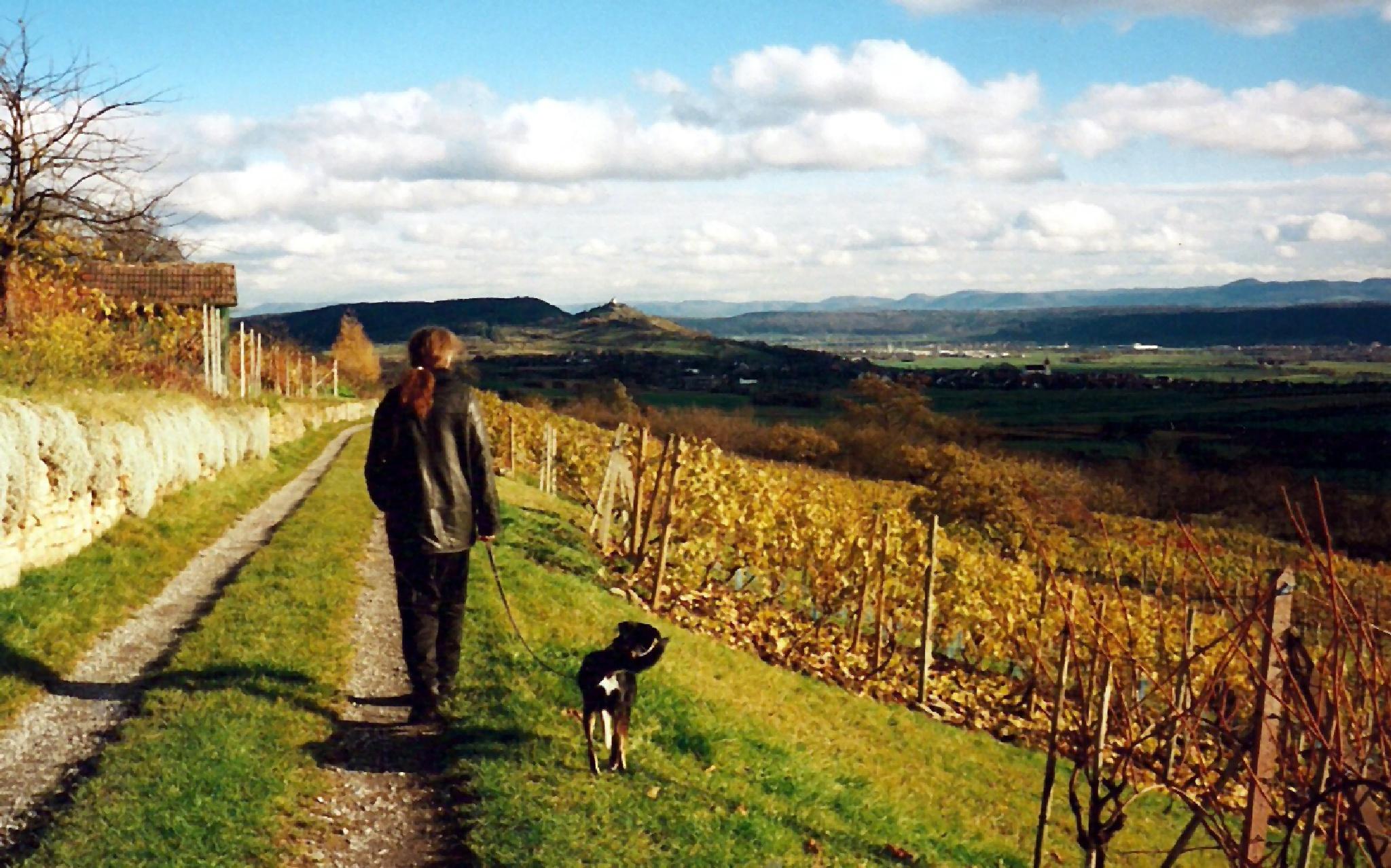 Walk in the Grapehill by astarot
