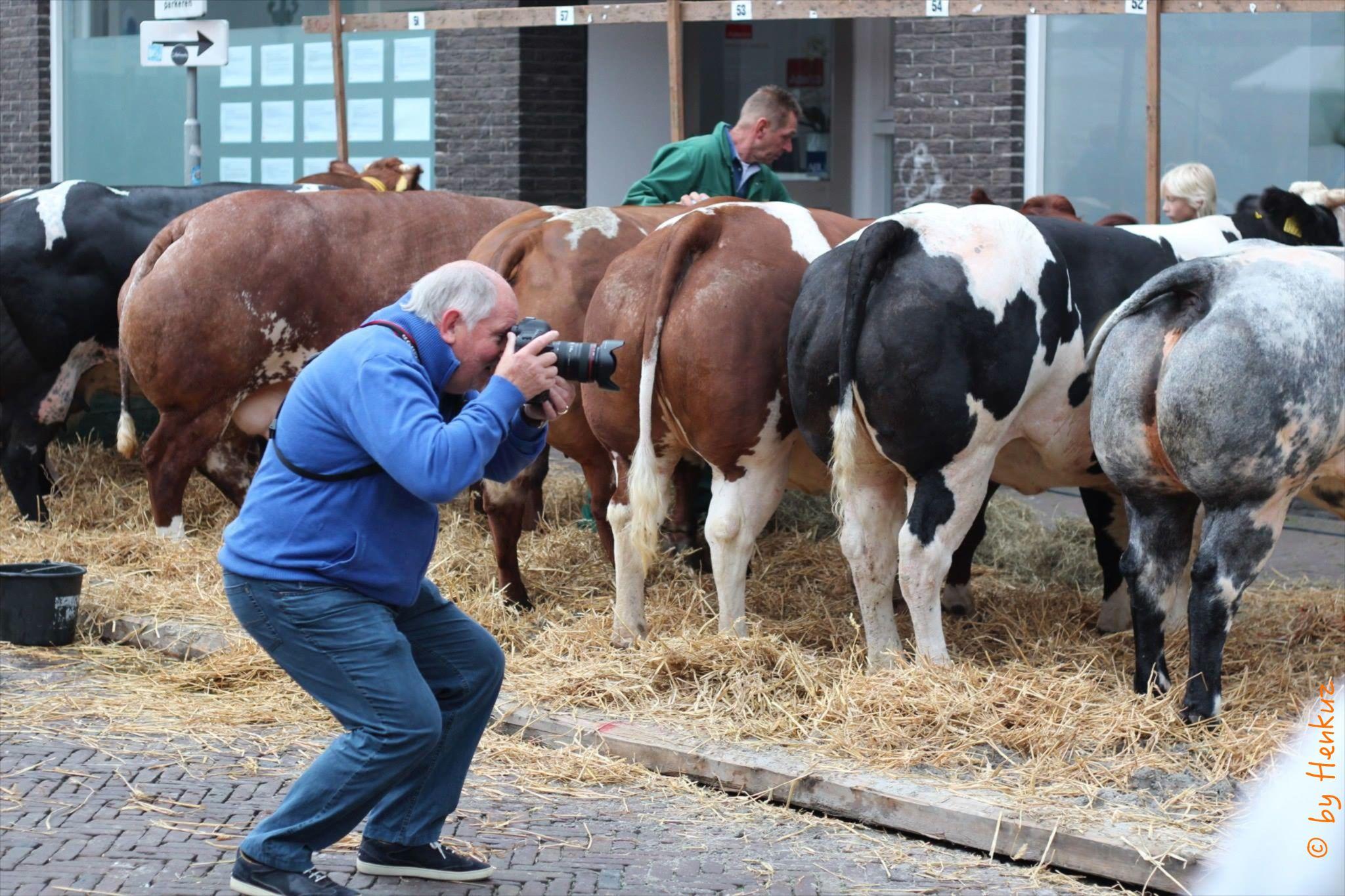 Shooting beef by Henk de Groot