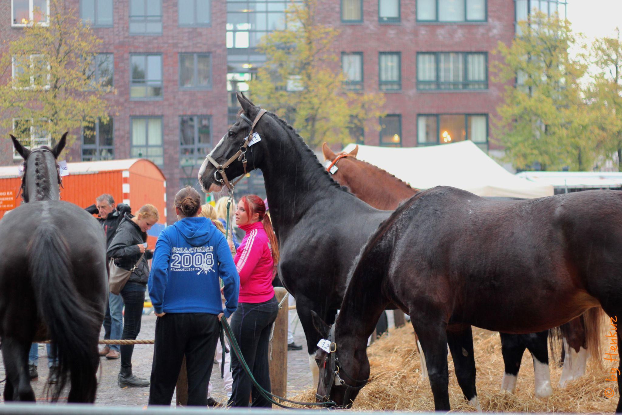 Alerted horse by Henk de Groot