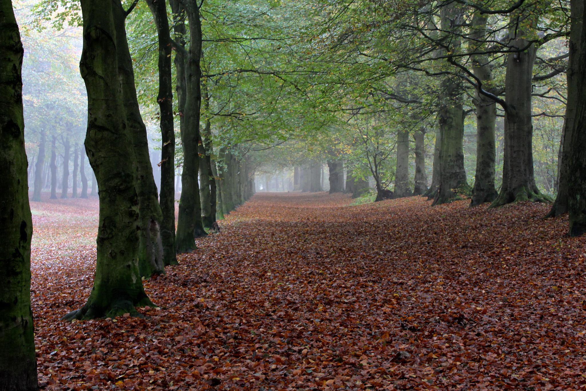 Heilooer bos by Henk de Groot